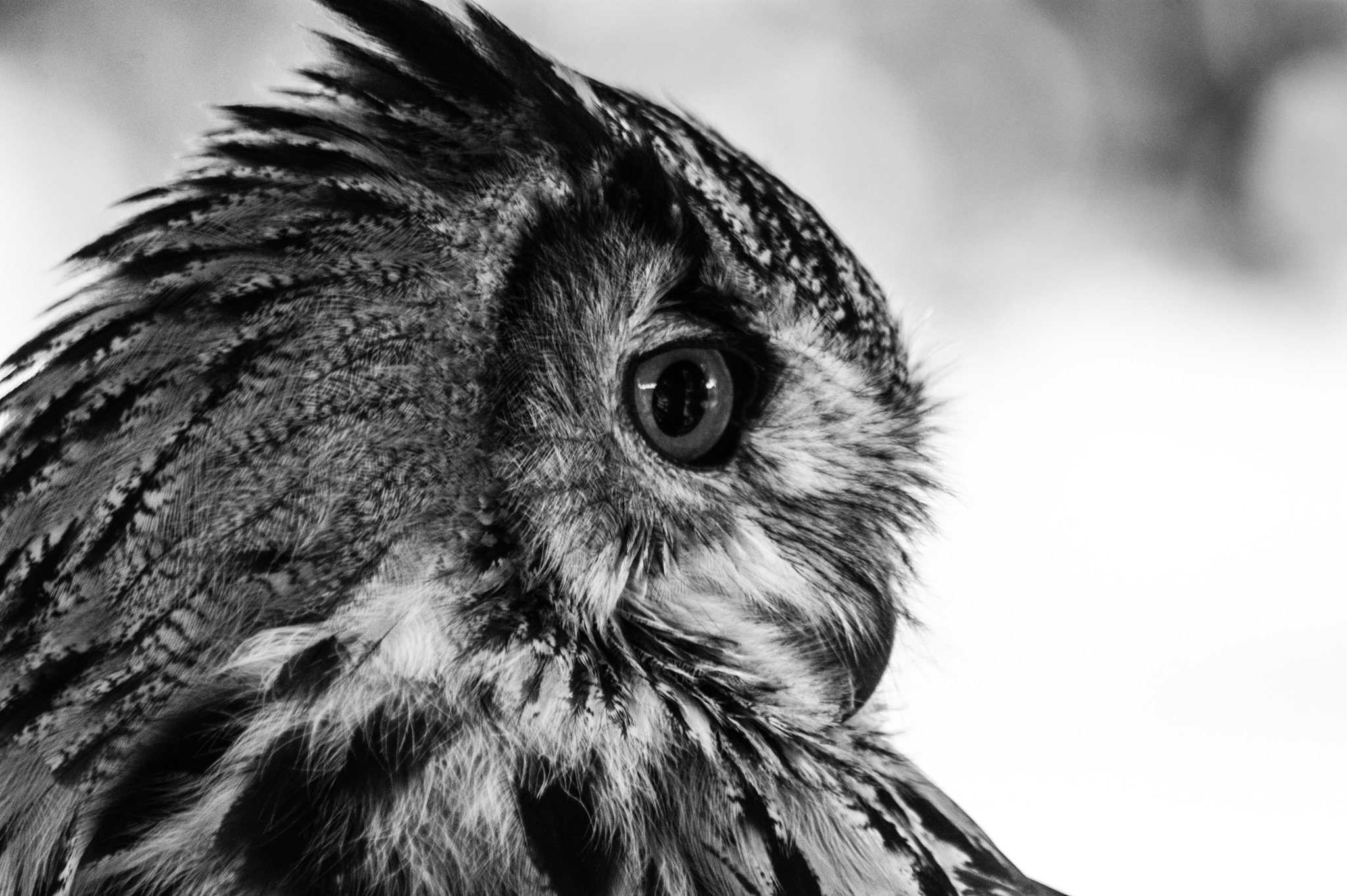 owl by Lisa  Smudge  Nature and Wildlife Photographer