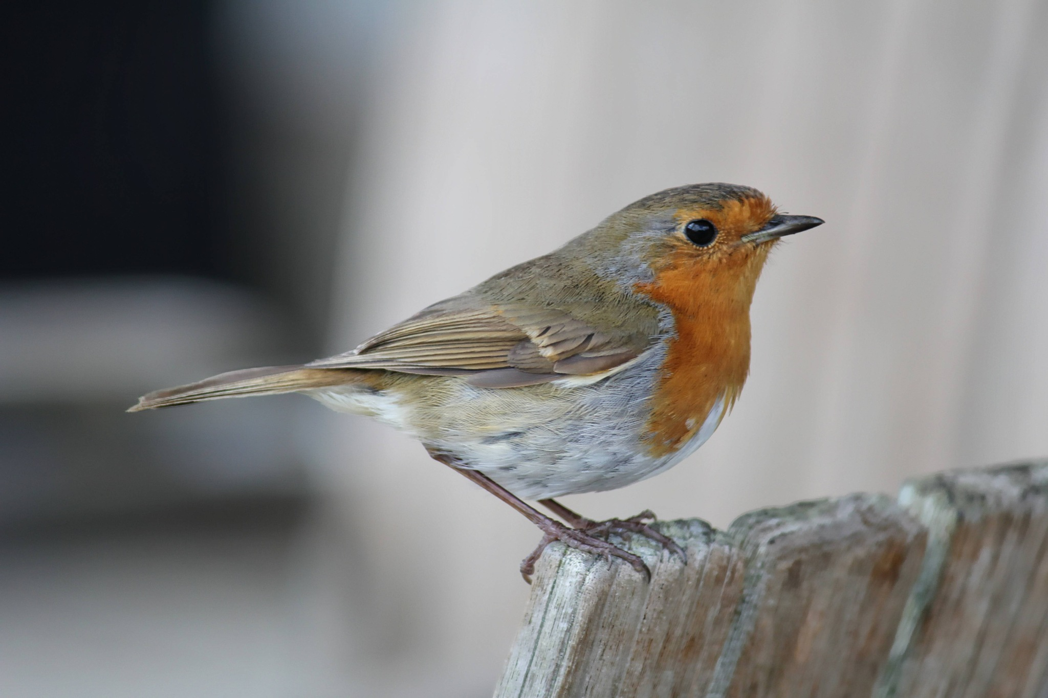 Robin at the Eden Project by Paul Gast