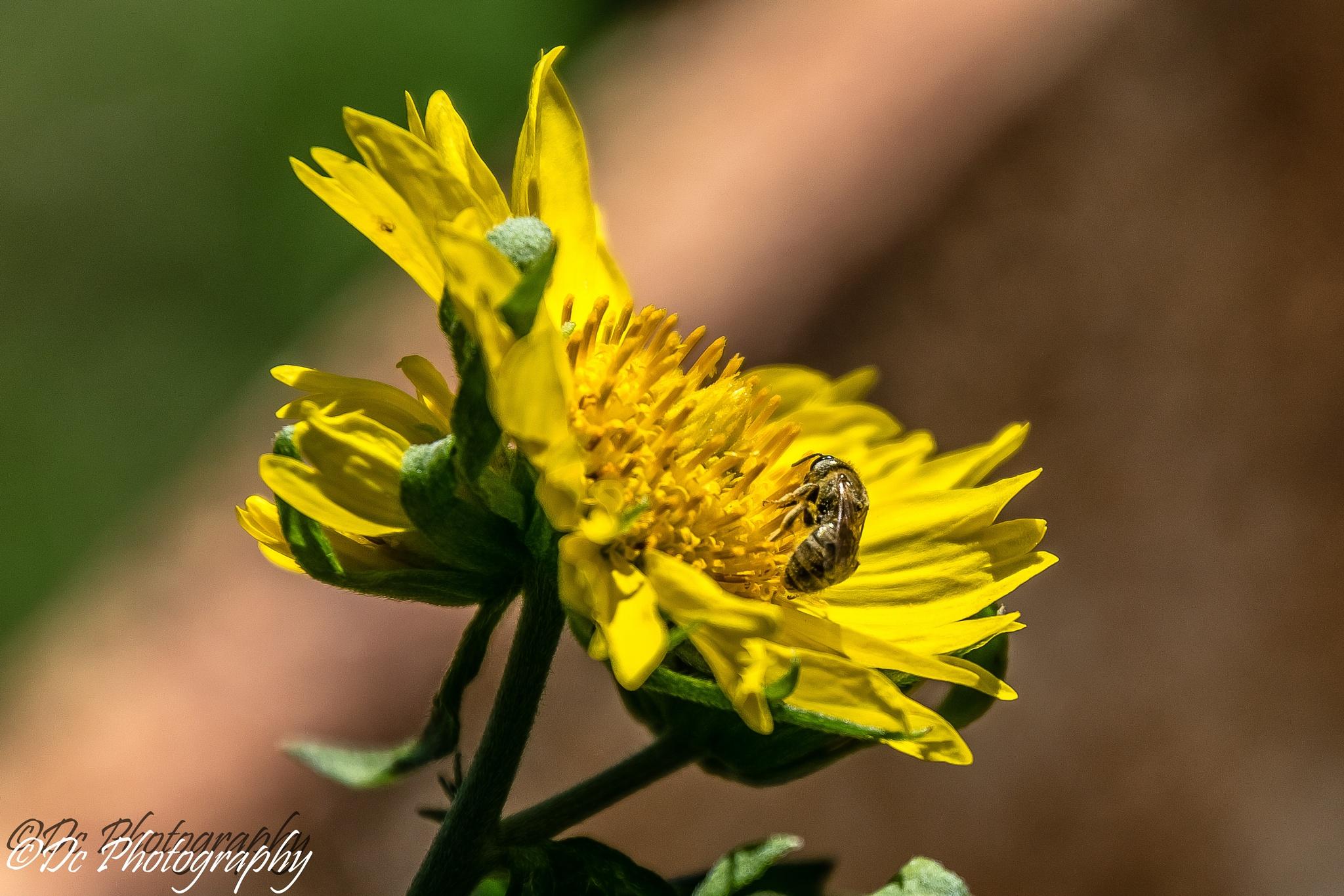 Flower & Bee by Dusky De Reuck