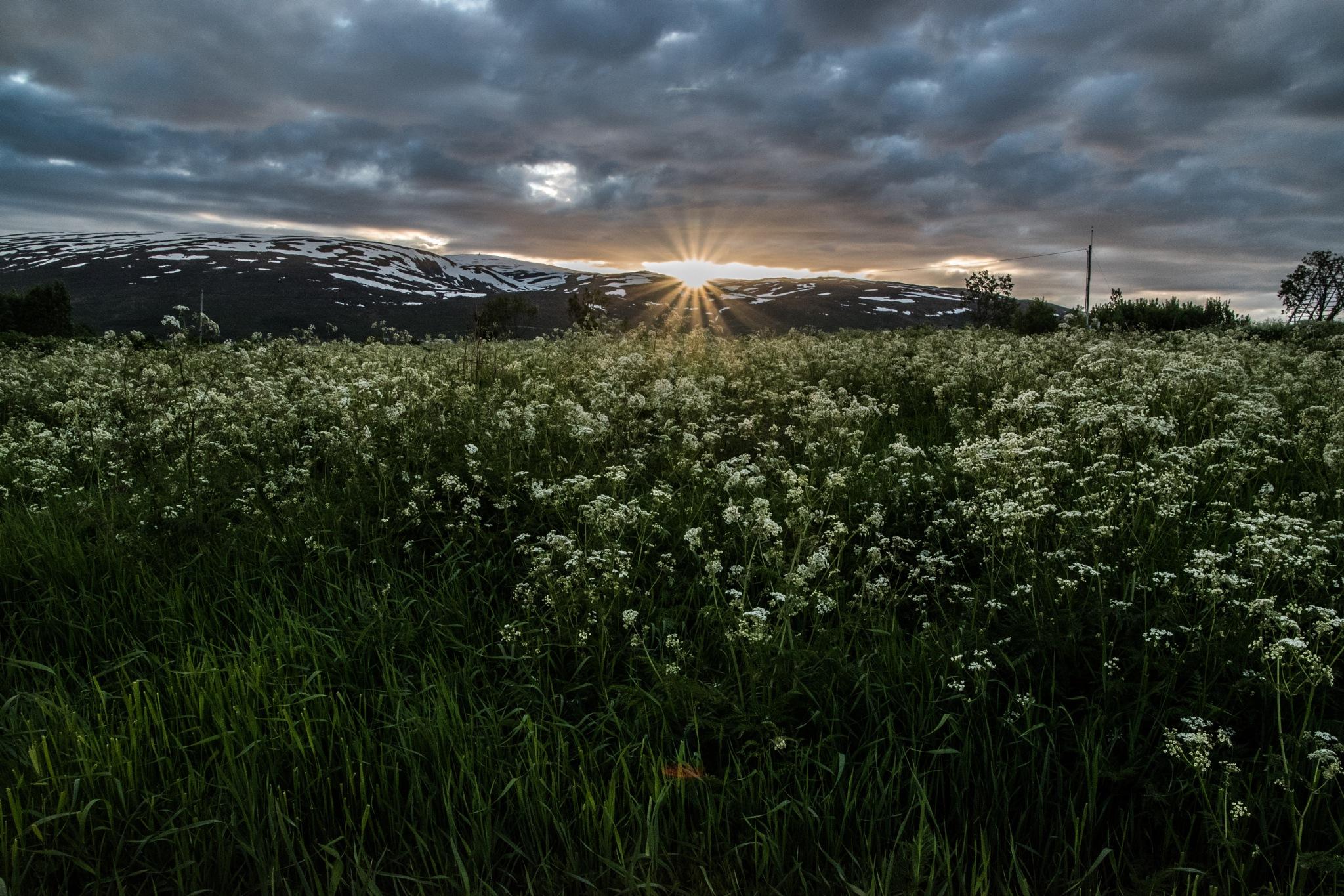 Midnight sun by SveinBorre