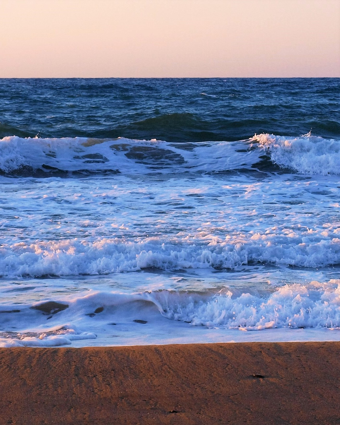 Sea Sandwich at Sunset. by Jacquelyn Hyde