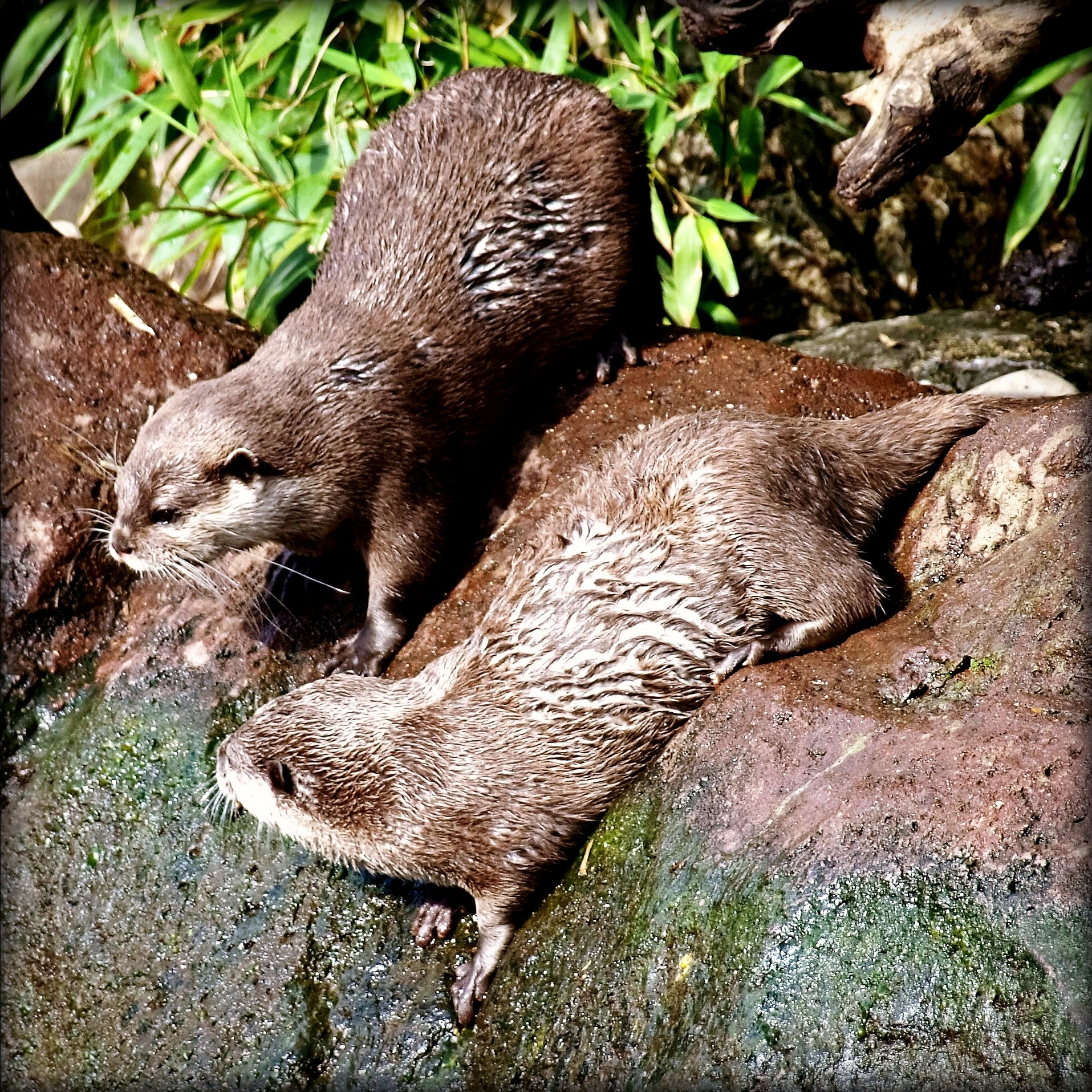Otters. by Jacquelyn Hyde