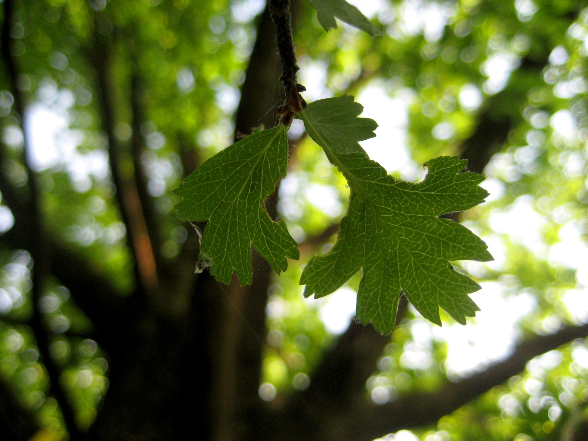 just a little leaf by Mihaela L