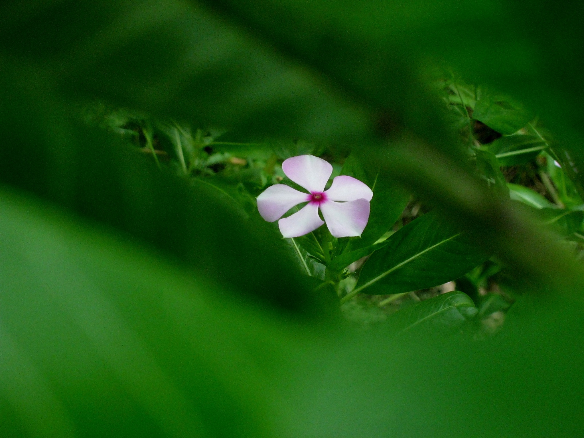 Every flower is a soul blossoming in nature.. by Sunanda Dasgupta