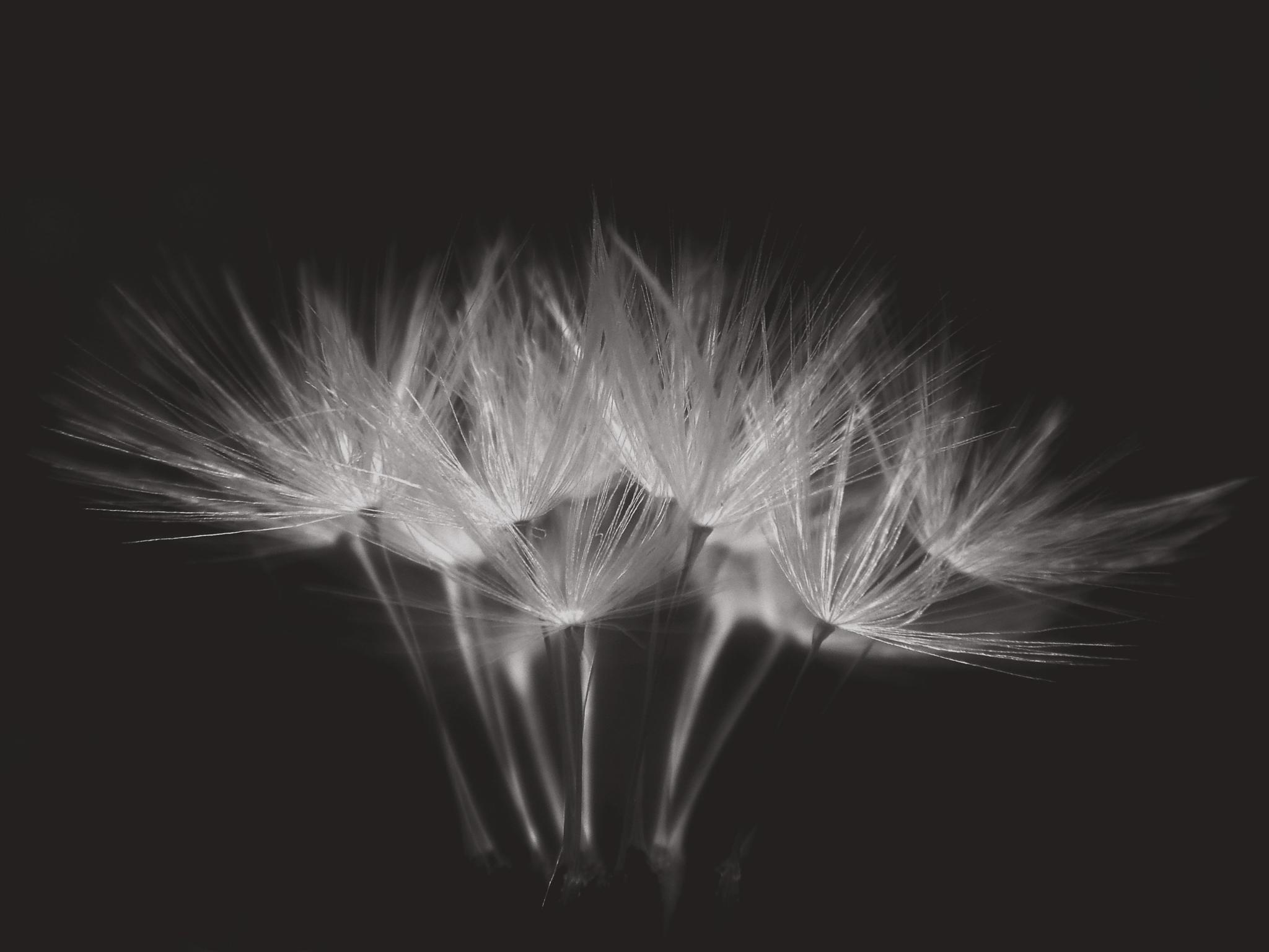 Untitled by Eryka Hende
