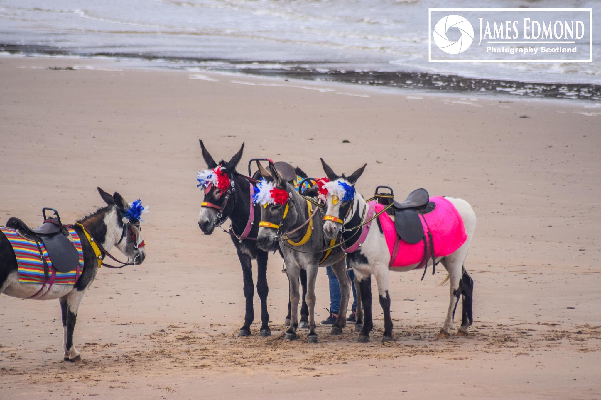 Colourful Donkeys by James Edmond Photography