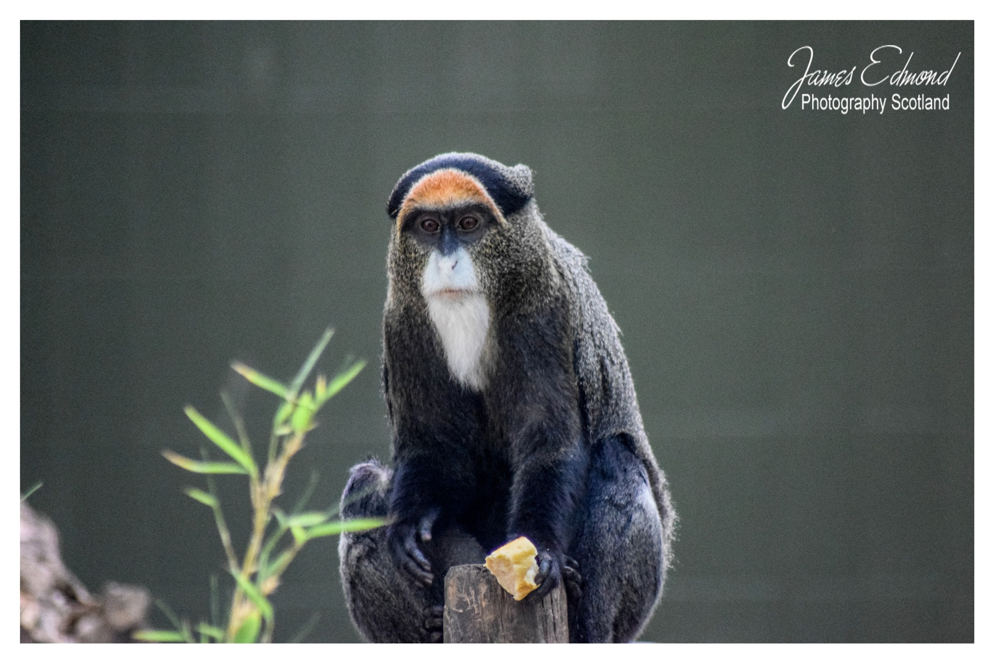 Small Monkey  by James Edmond Photography
