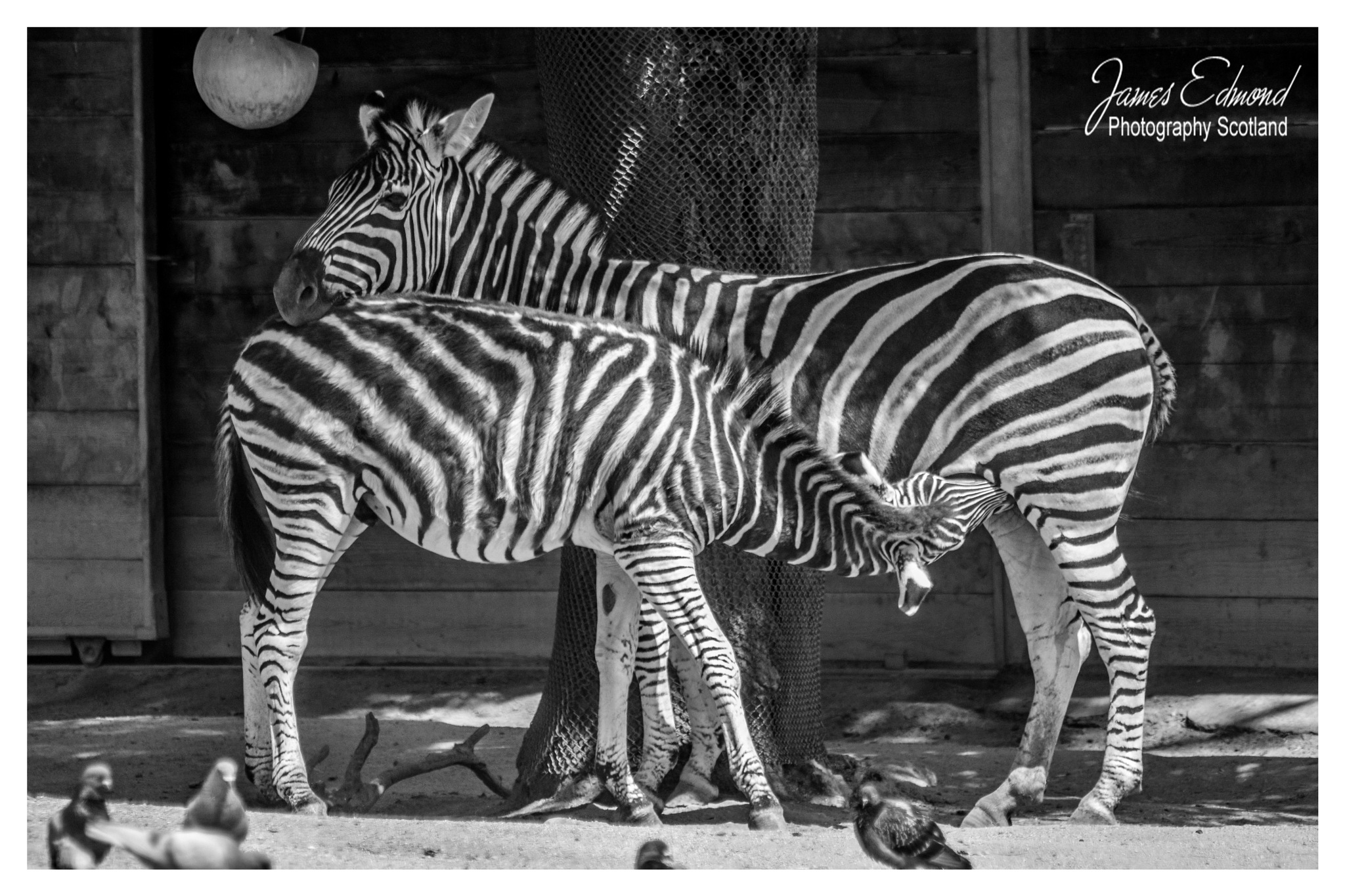 Happy Families by James Edmond Photography