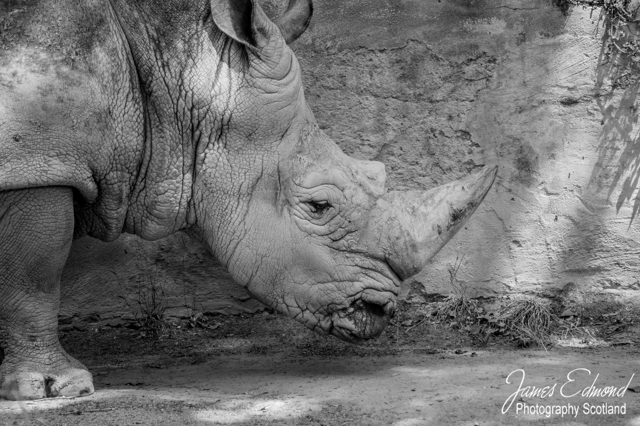 White Rhinoceros by James Edmond Photography