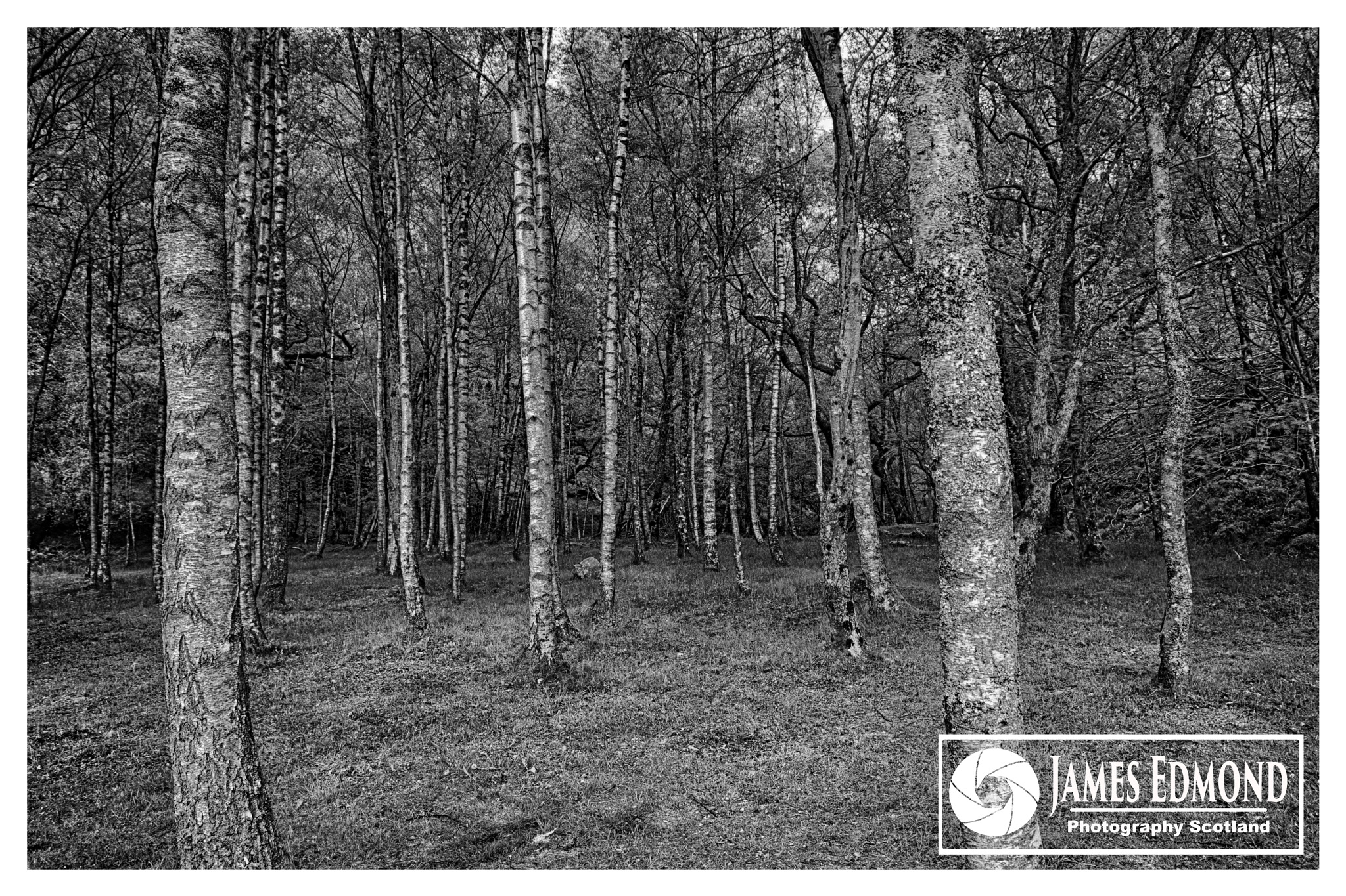 Trees in Monochrome at Loch Katrine by James Edmond Photography