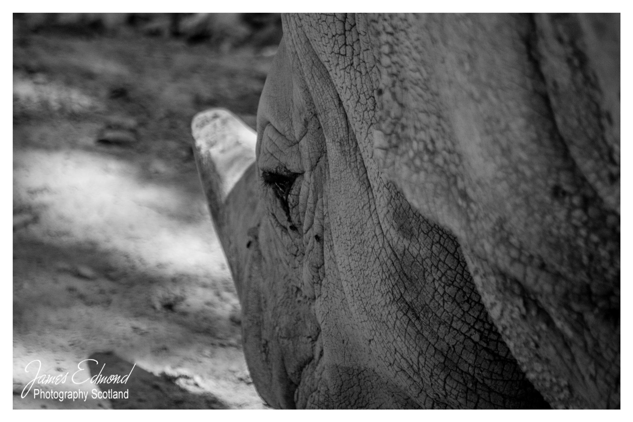 White Rhino by James Edmond Photography