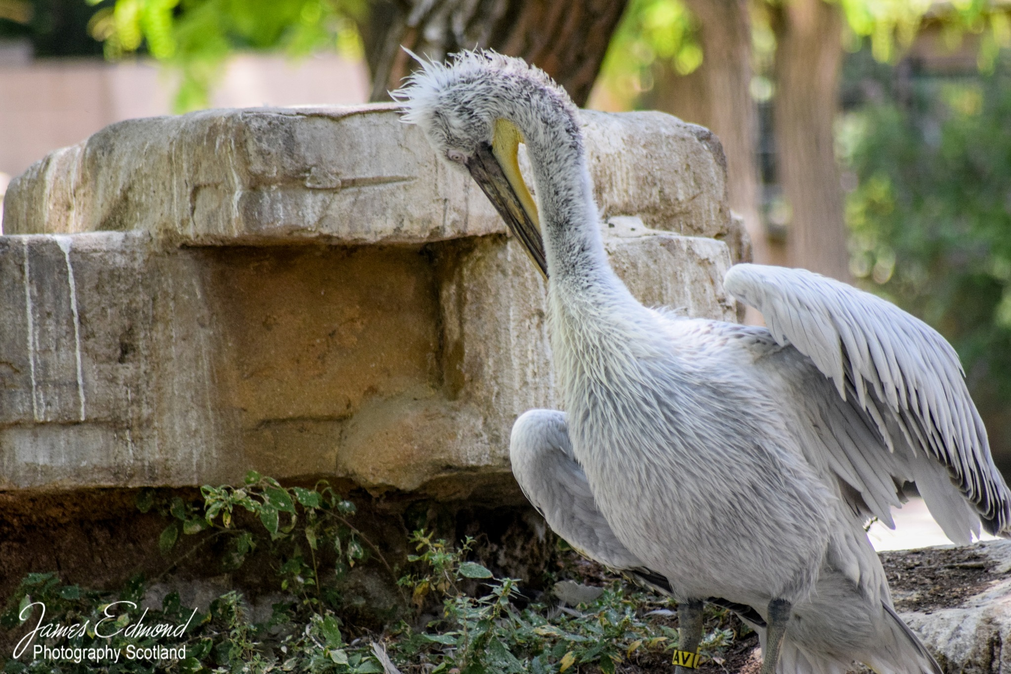 beautiful bird by James Edmond Photography