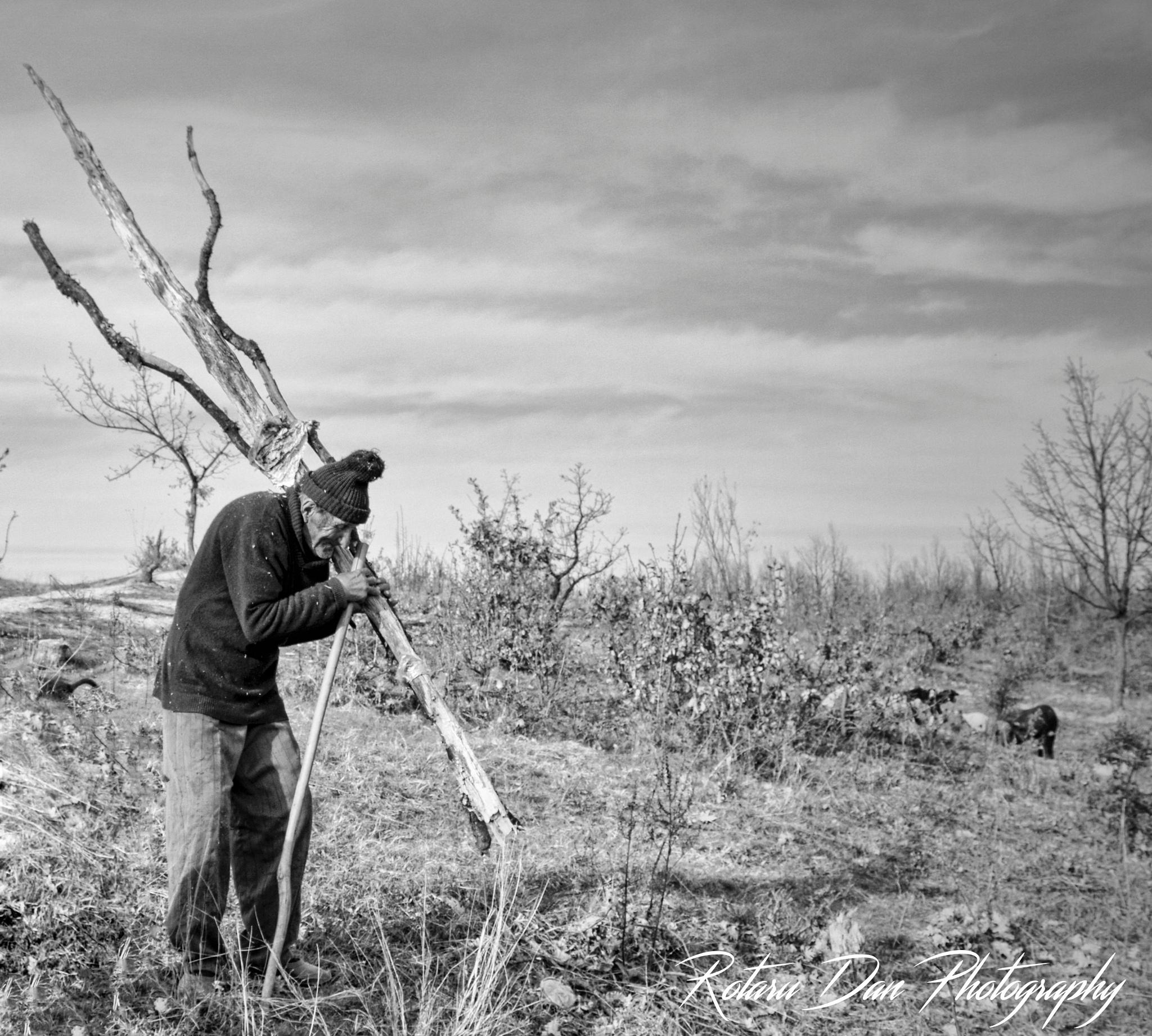 Old man, work hard by Rotaru Dan