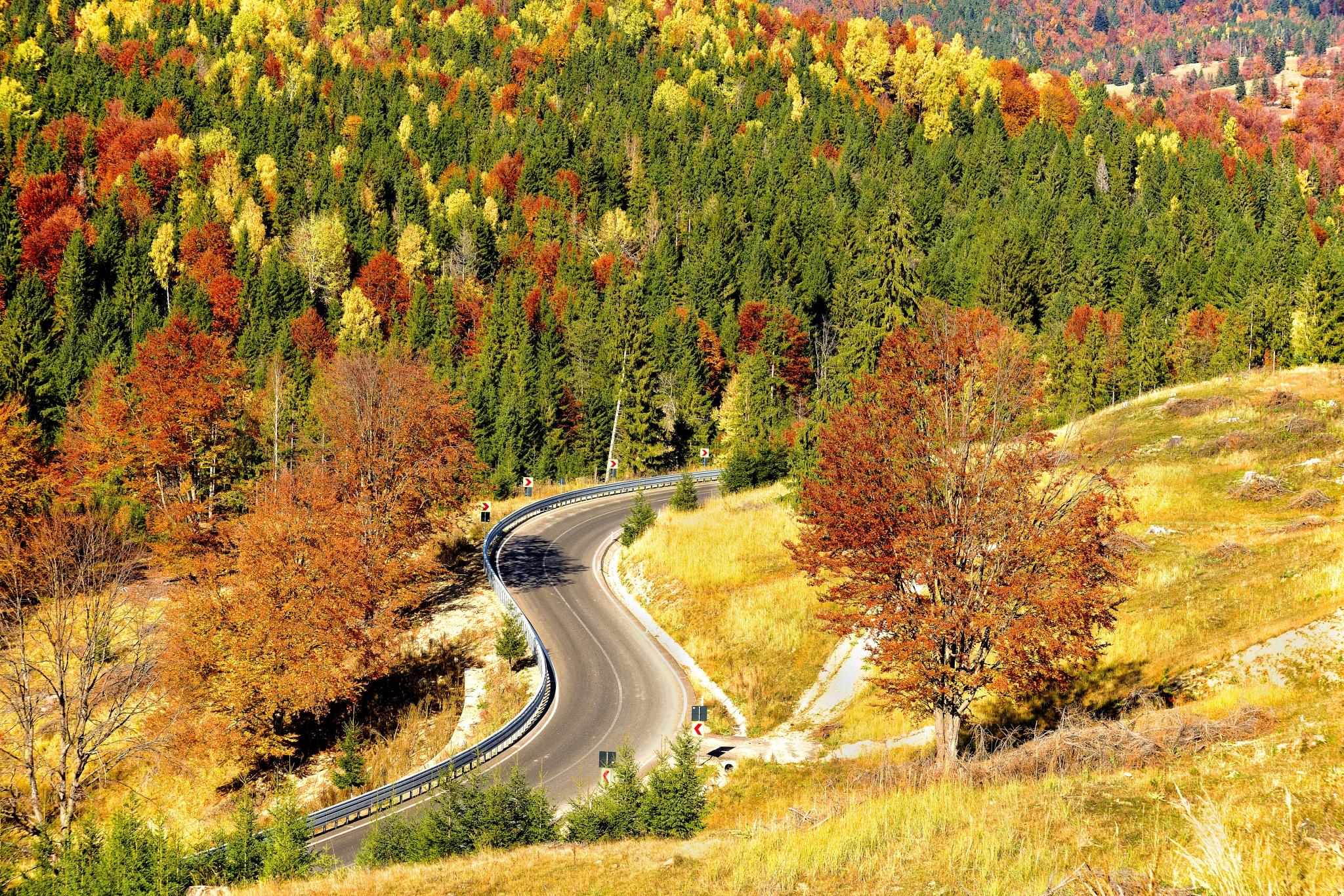 Autumn by Nicolae Ivanciu