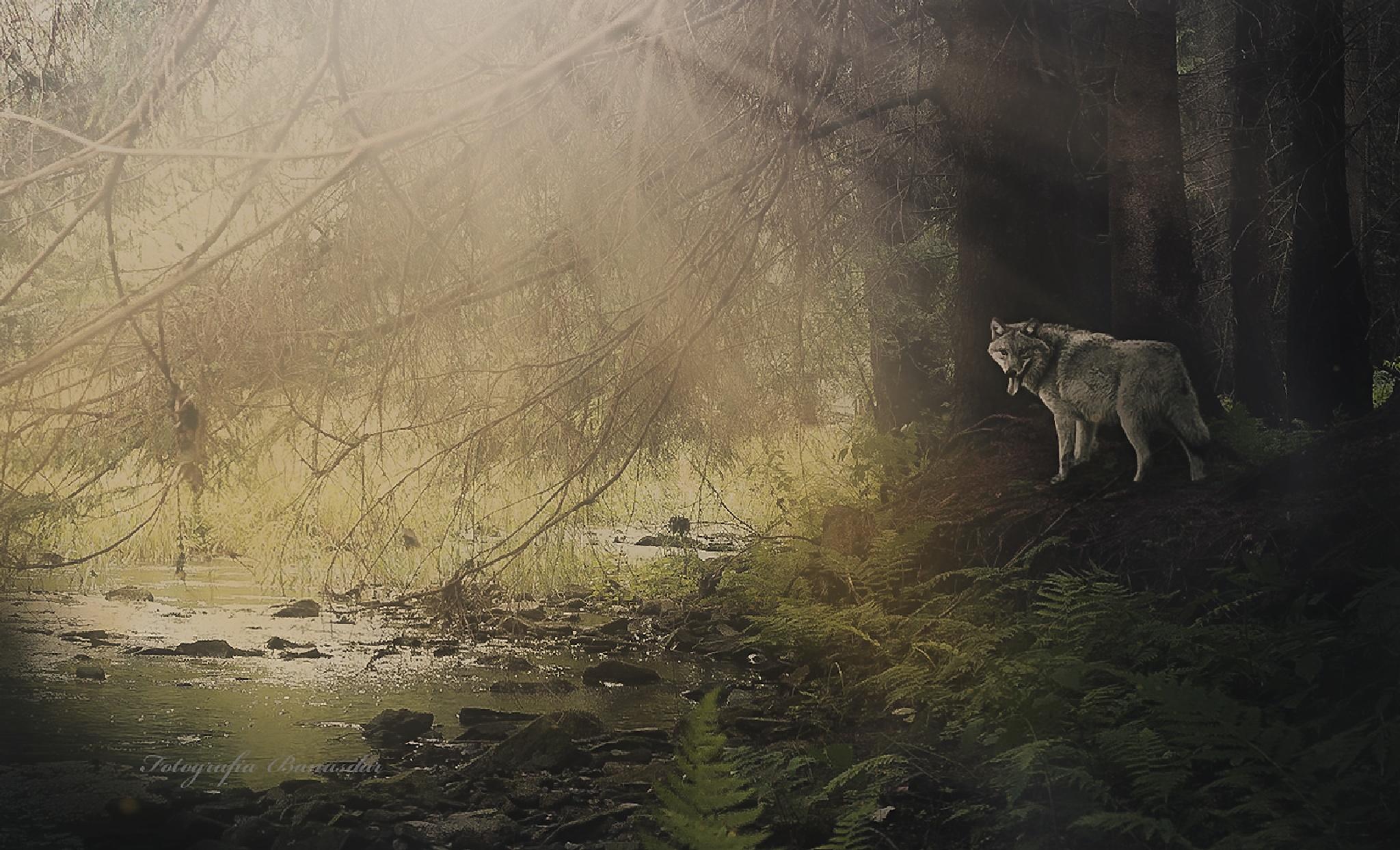 Untitled by Dariusz Banas