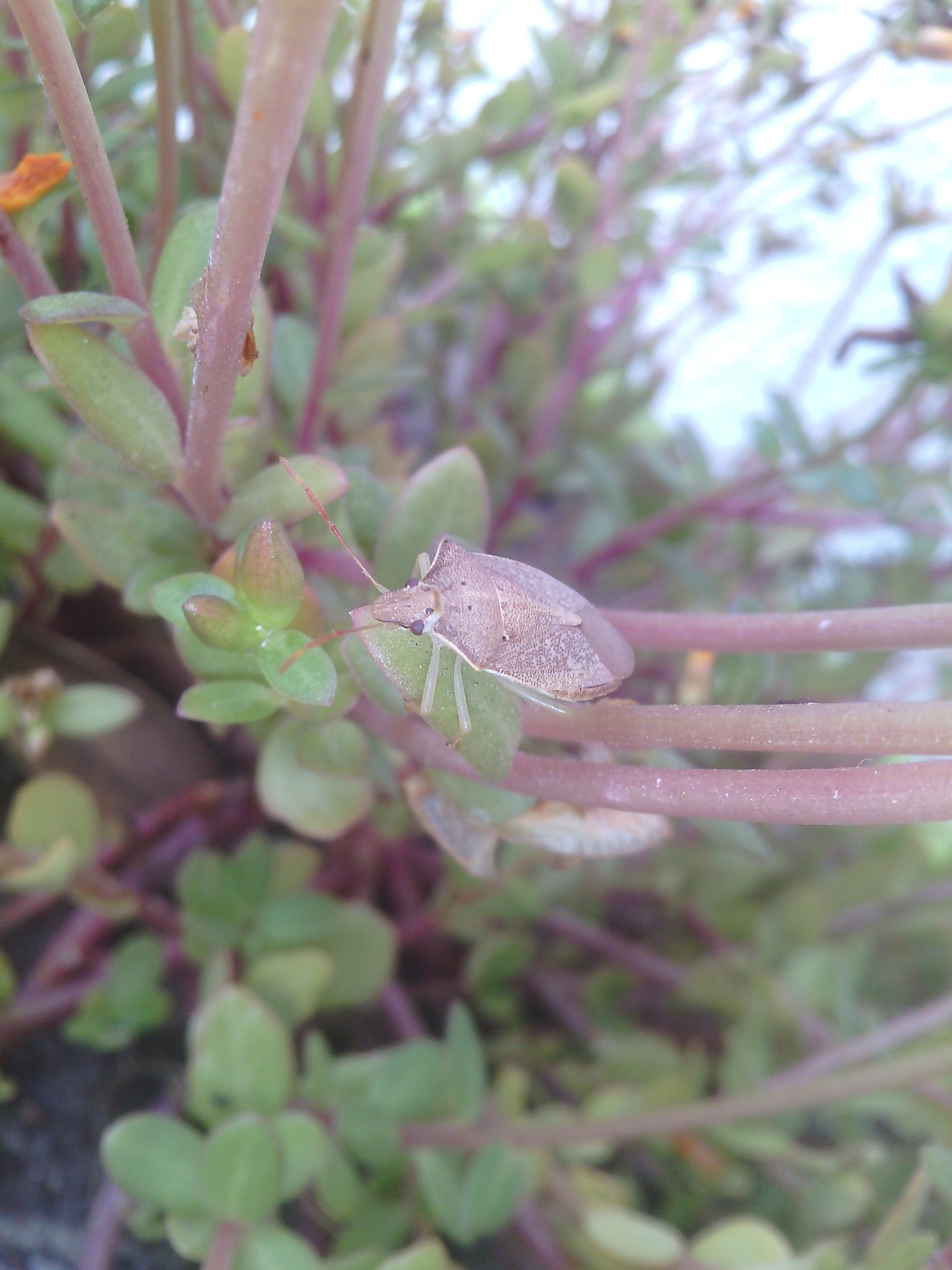 Stink Bug by shantellelottering