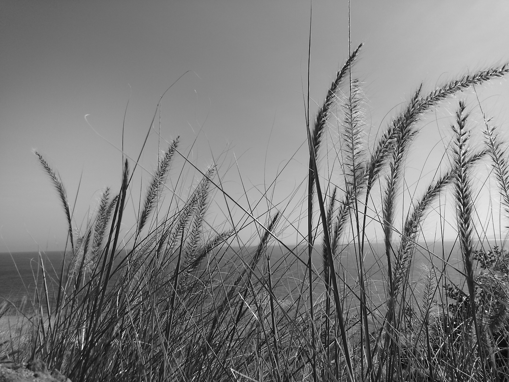Photo in Black and White #fynbos #mountains #ocean #black and white #sea #gardens #western cape #south africa