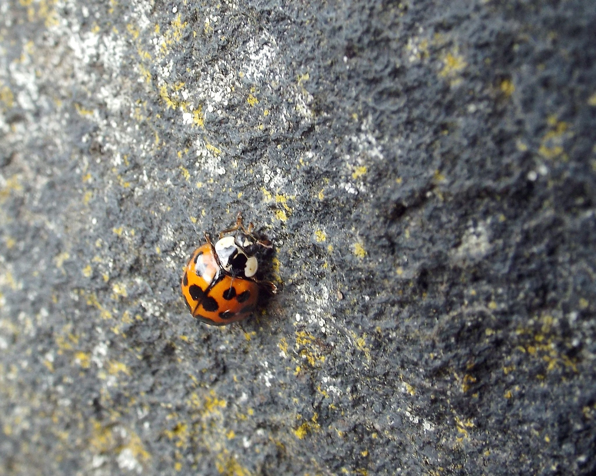 Lovely ladybird by Eve King