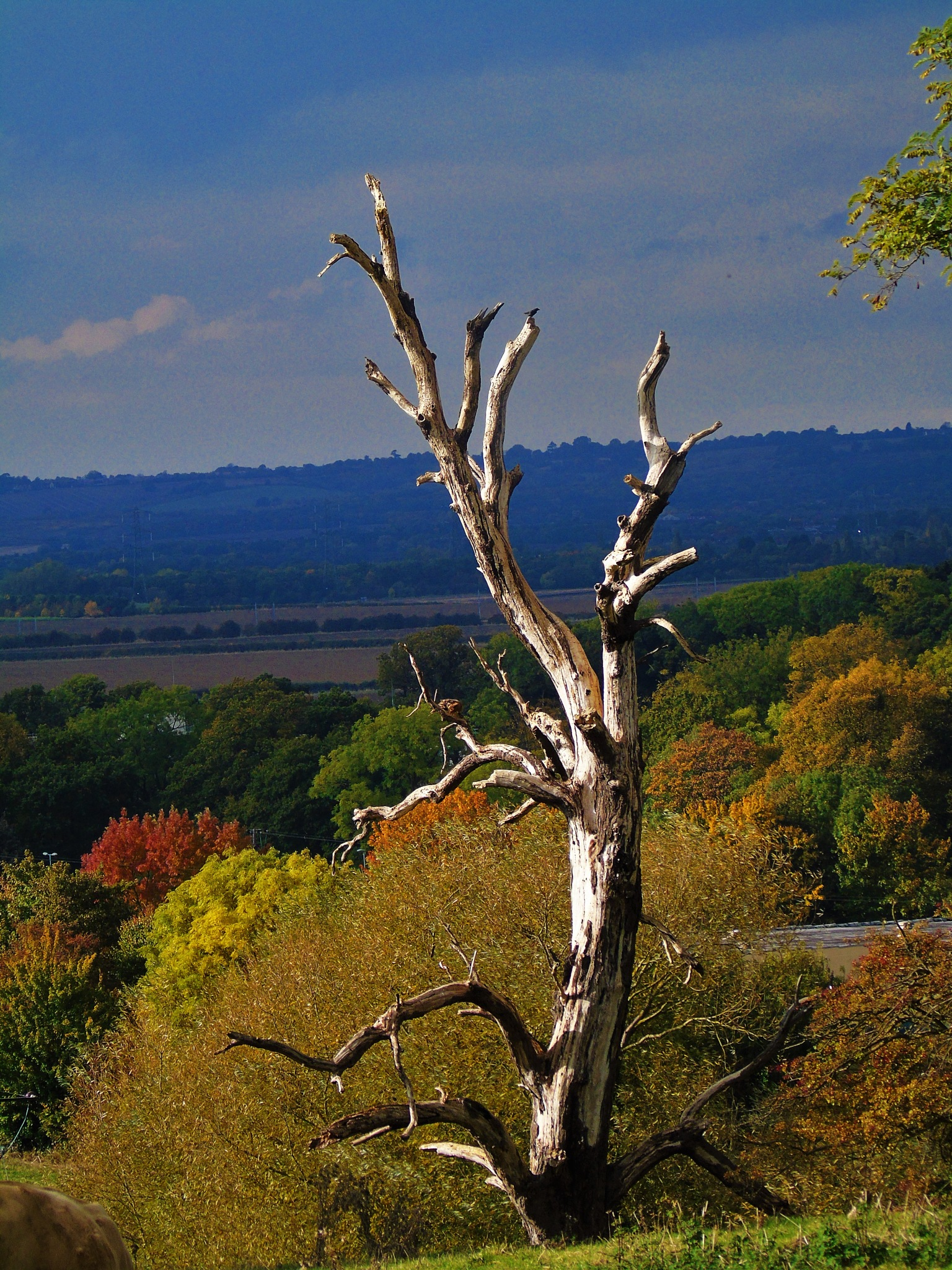The Lightening tree. by Karen Brooks