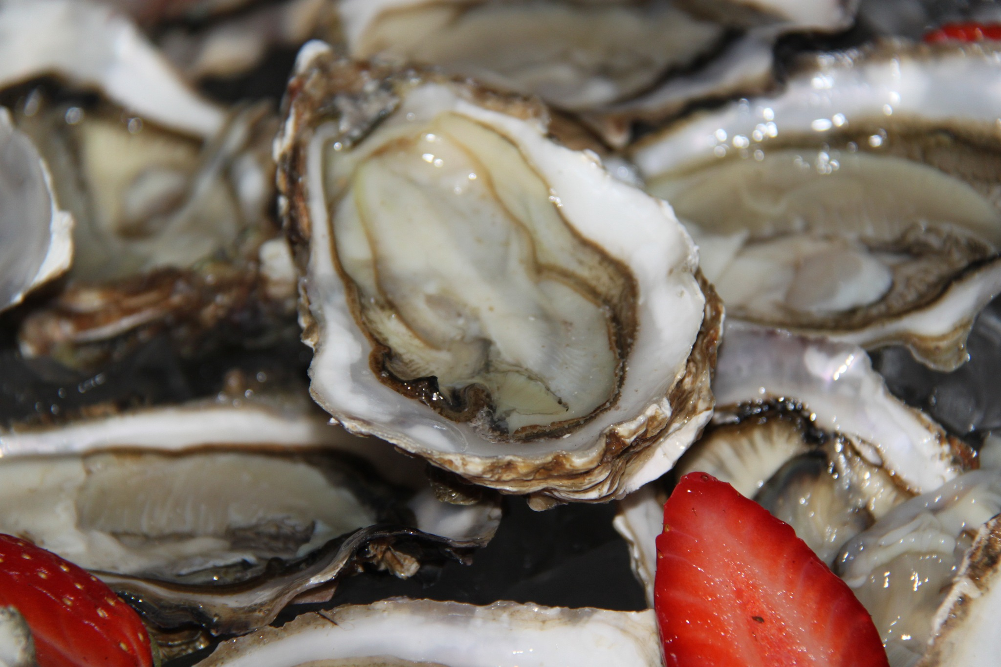 Oysters by Eassa