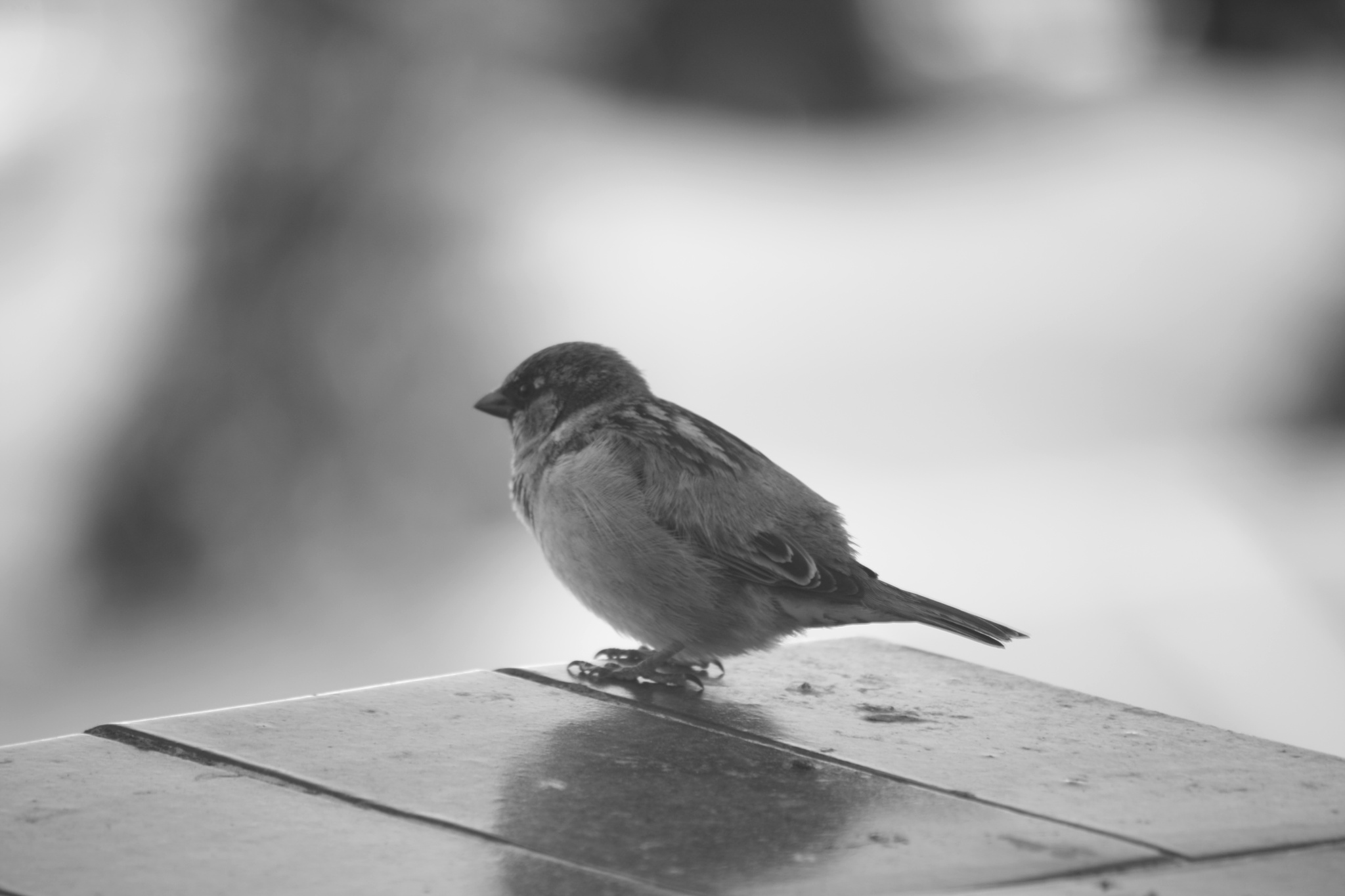 Sparrow by Eassa