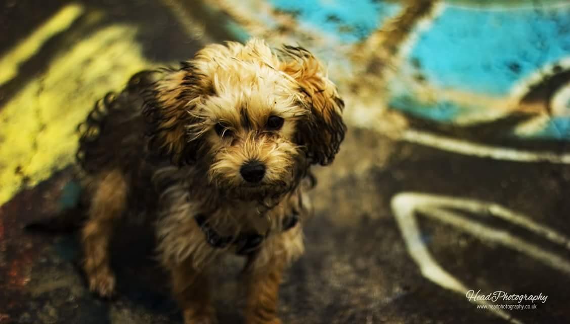 Dog Photoshoot  by Craig Head