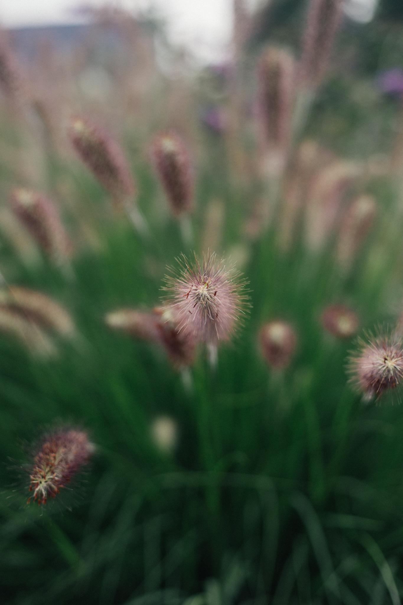Photo in Nature #nature #plant #flower #green #tones #dark #deep