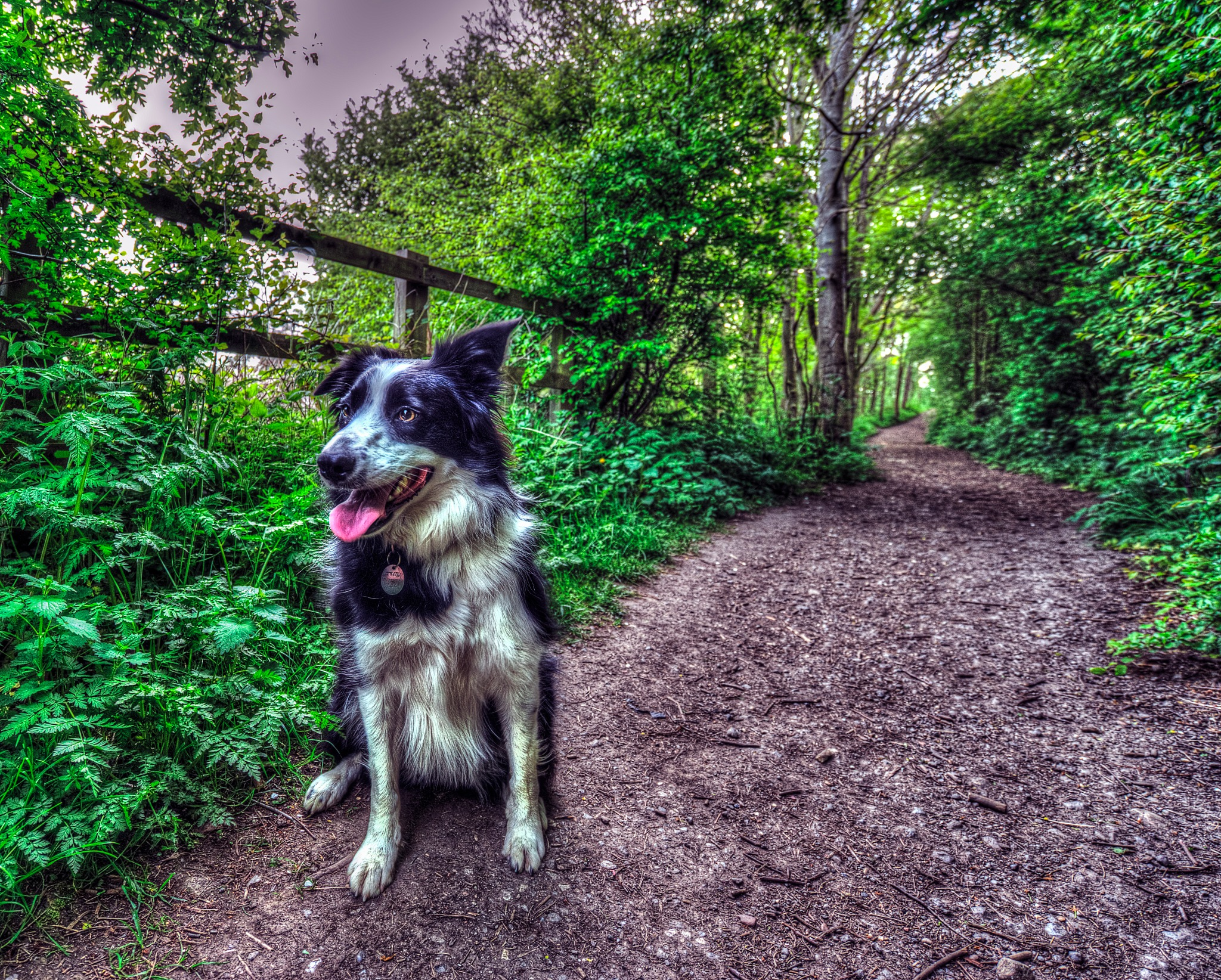 Lassie by mark fisher