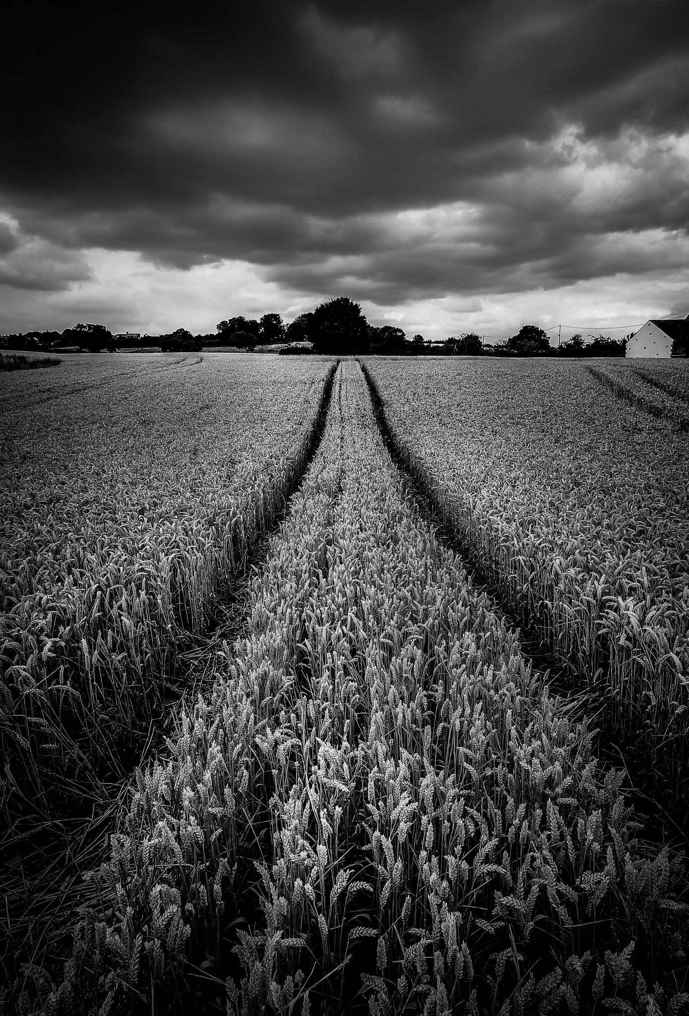 Farmers field by mark fisher