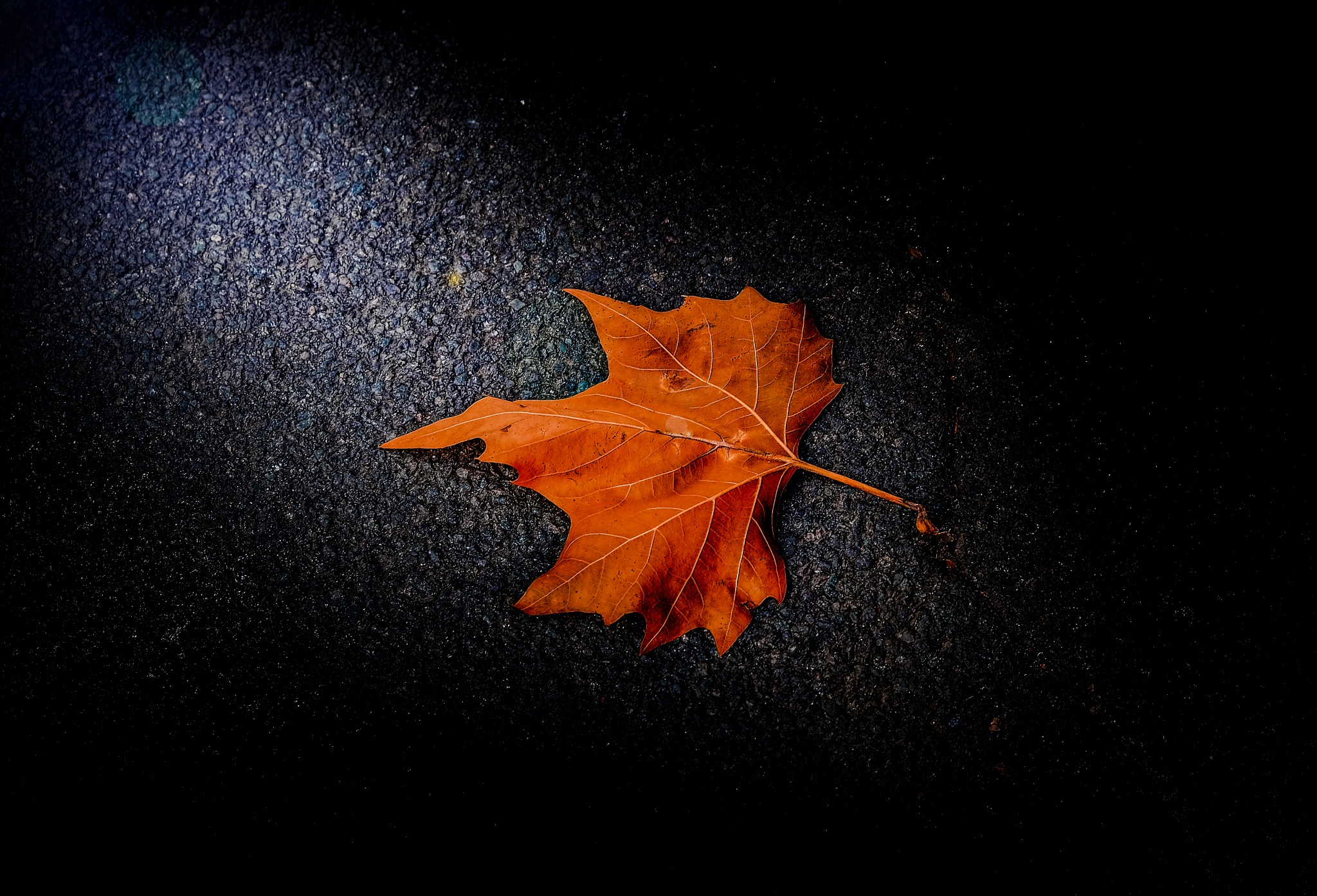 Early fall by mark fisher