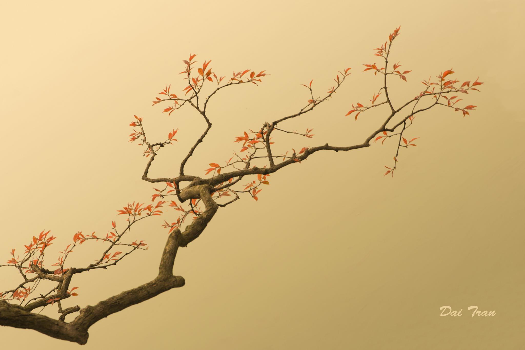 Spring by Dai Tran