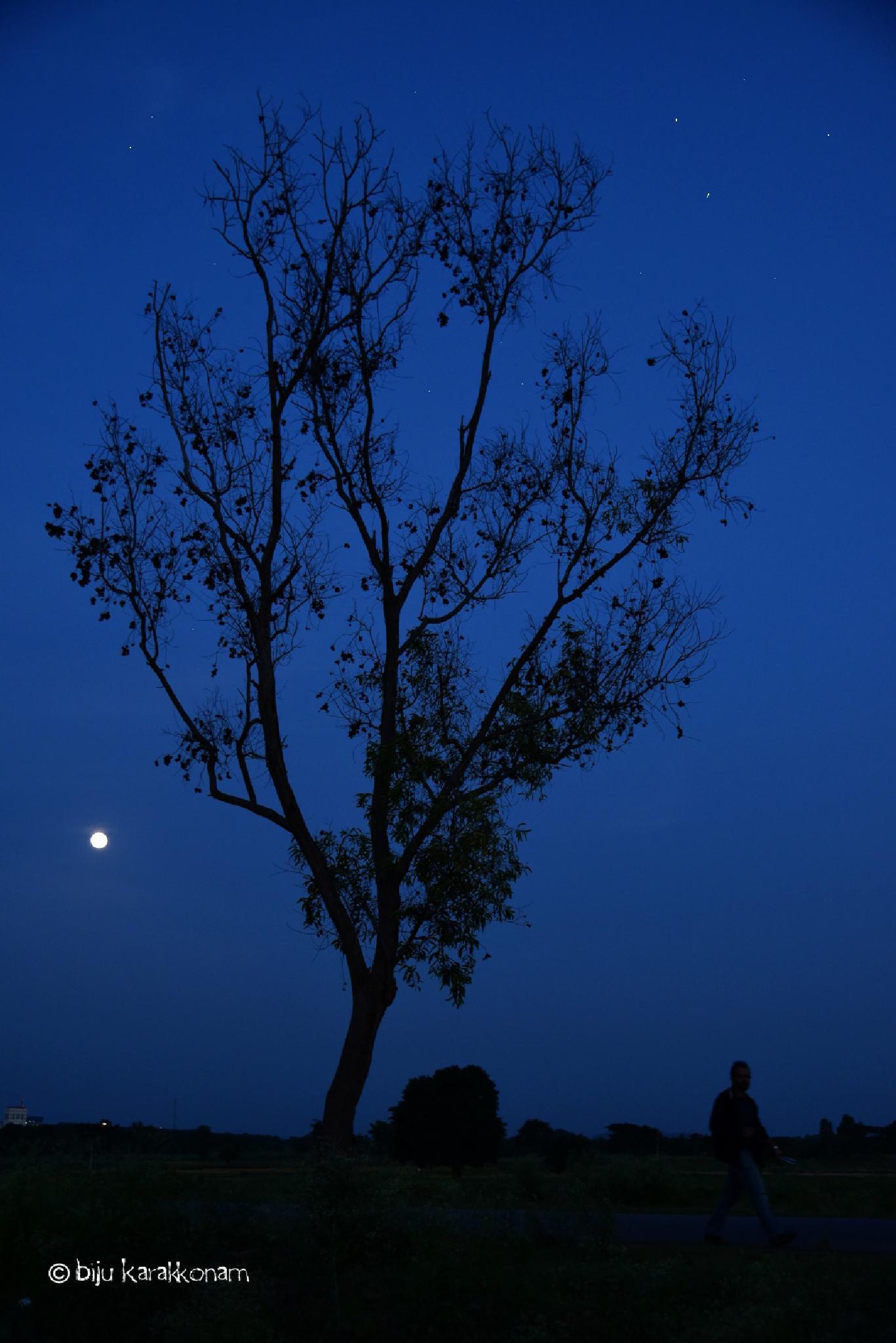Photo in Nature #night #moon #sky