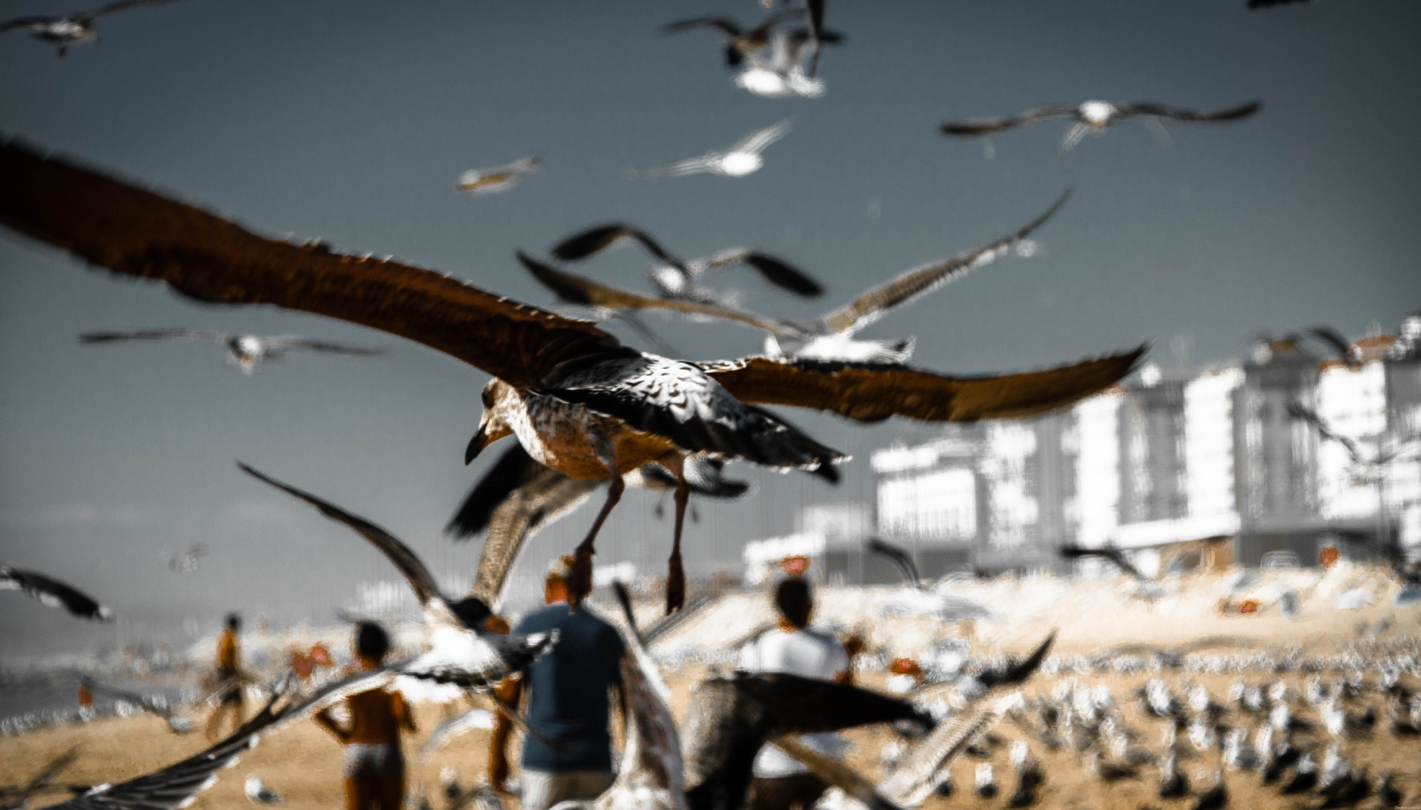 The big segull by victormar