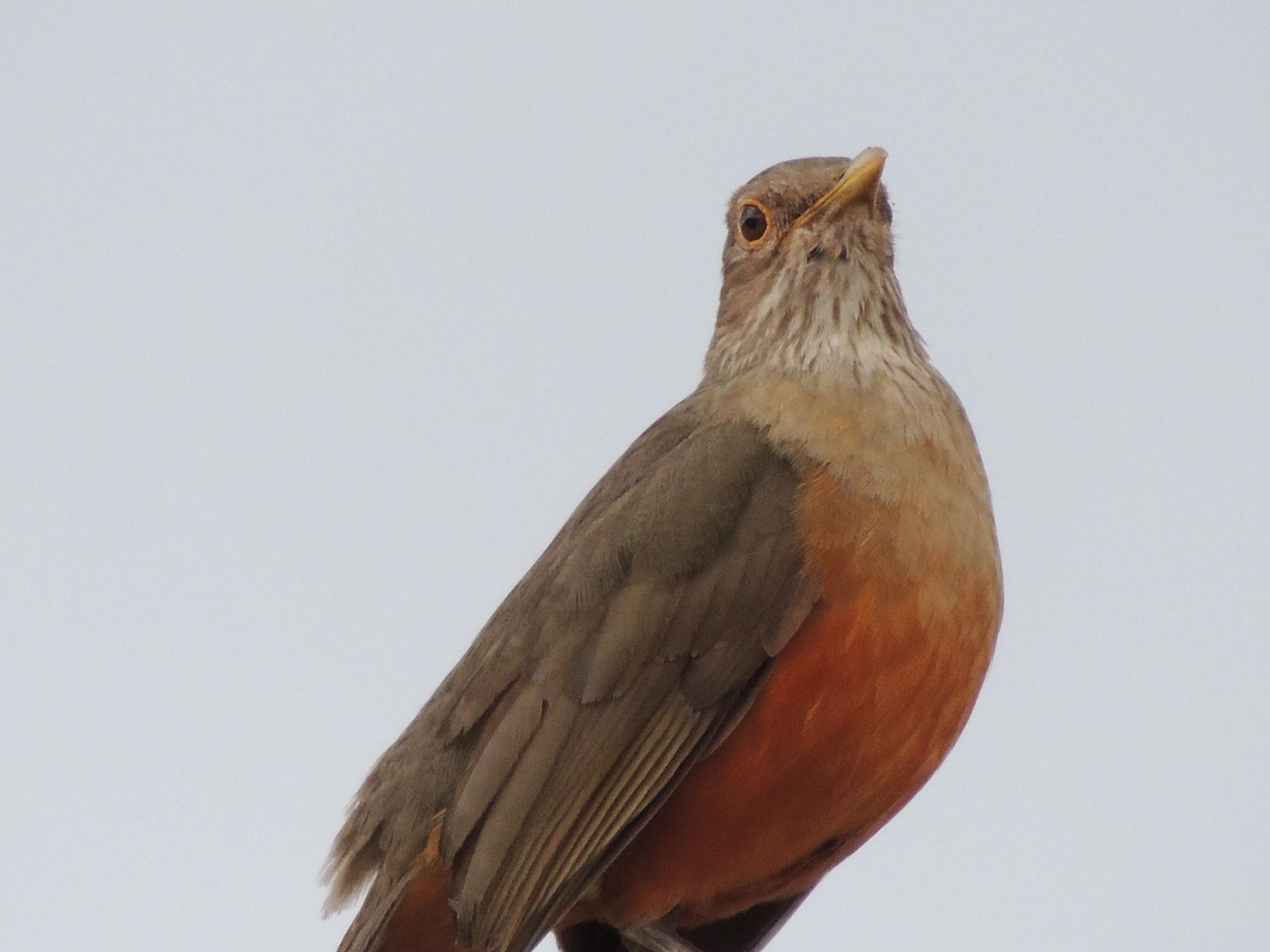 Photo in Random #bird #nature