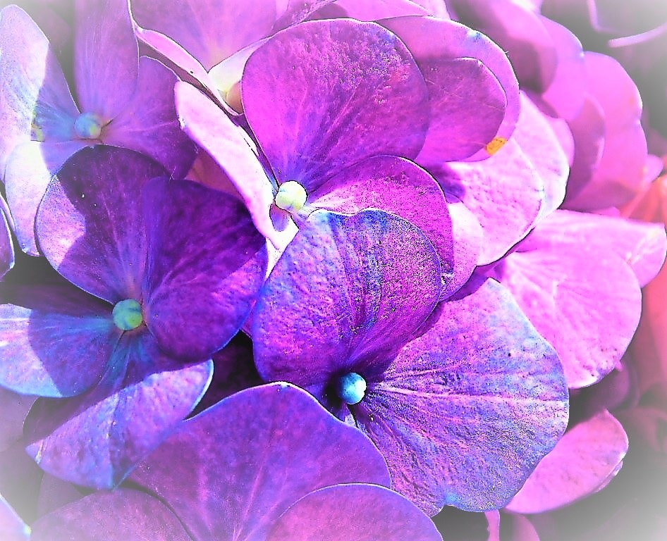 My favourite colours by Sandra Wright