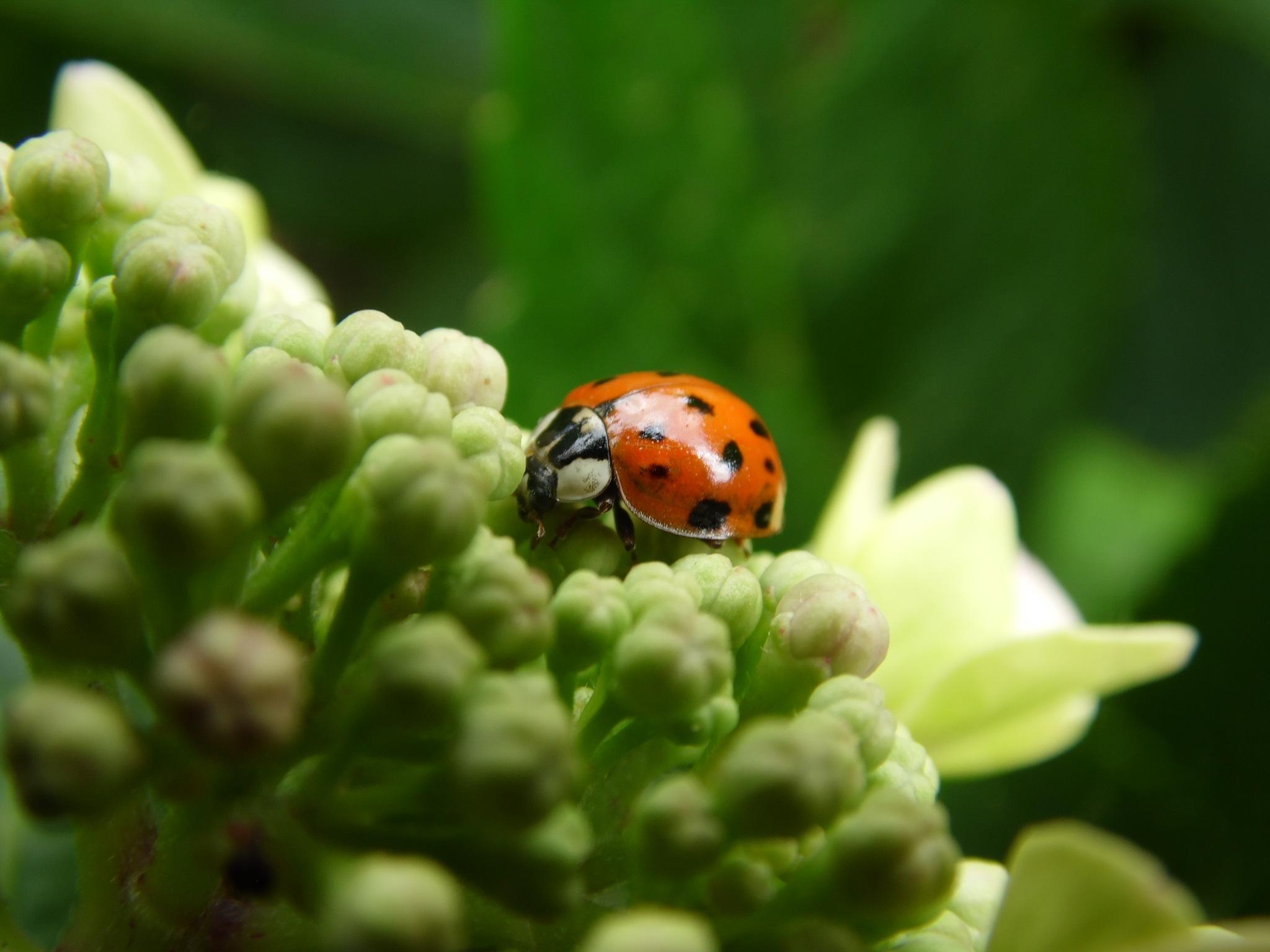 Ladybird ladybird fly away home..... by Sandra Wright