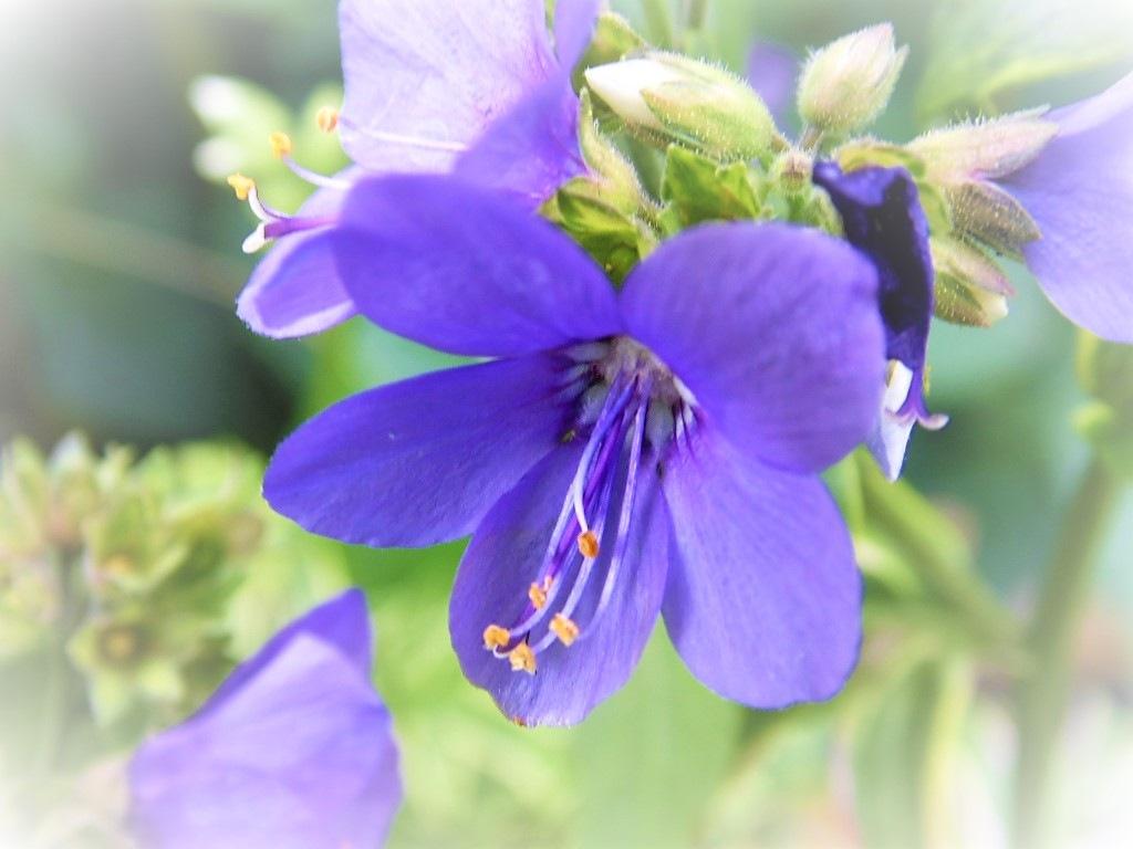 Feeling blue by Sandra Wright