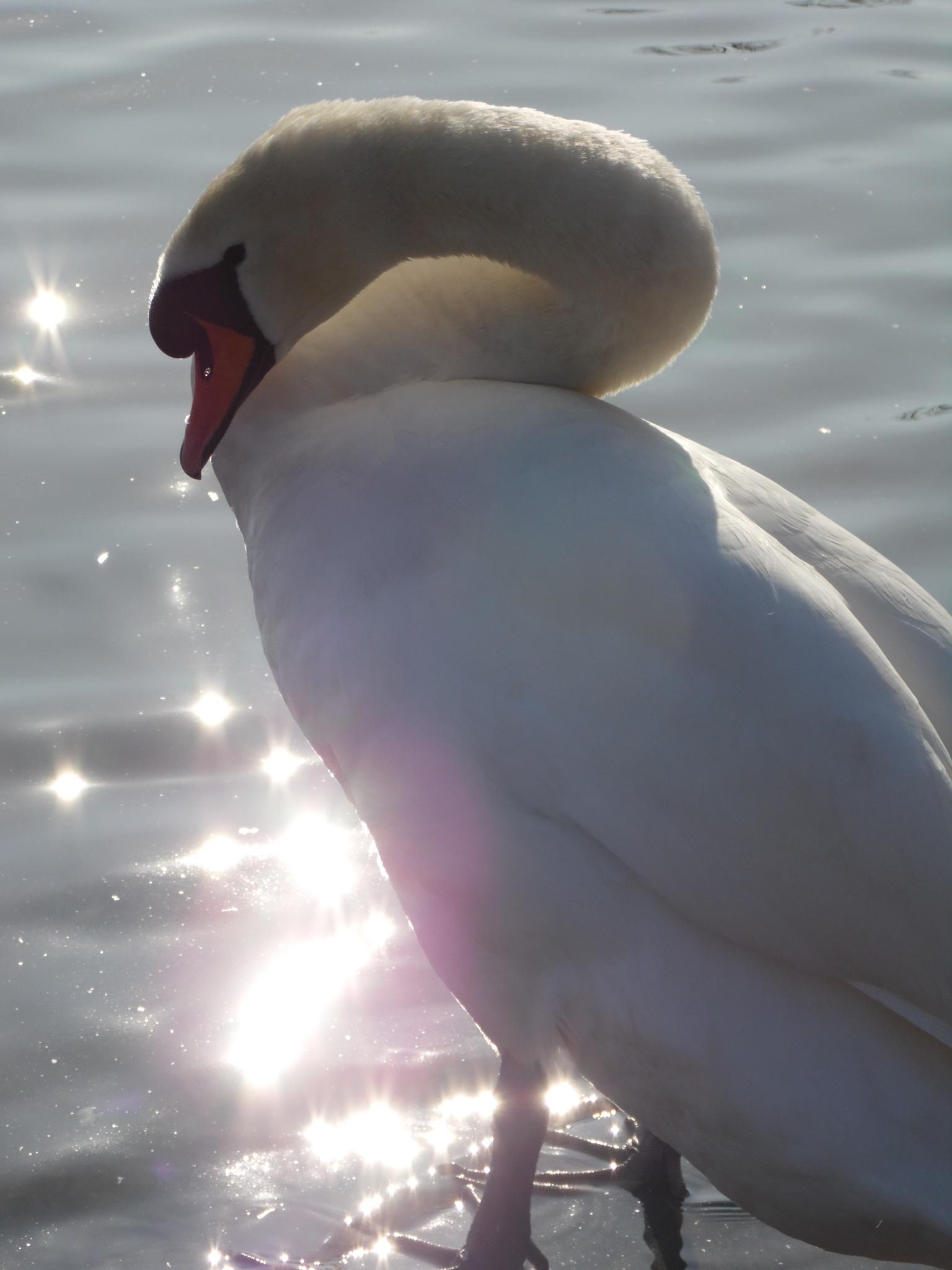 Sparkling elegance by Sandra Wright