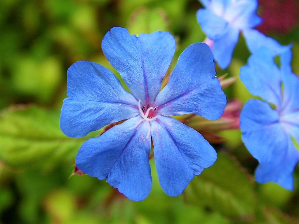 Pretty blue bloom by Sandra Wright