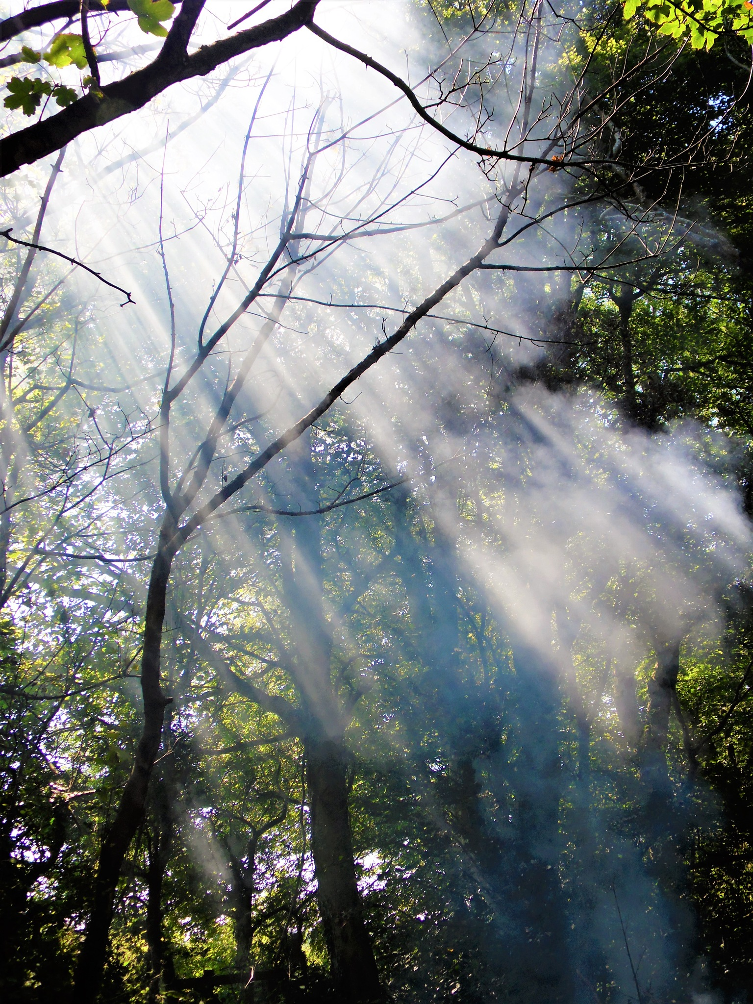 Forest Haze by Sandra Wright
