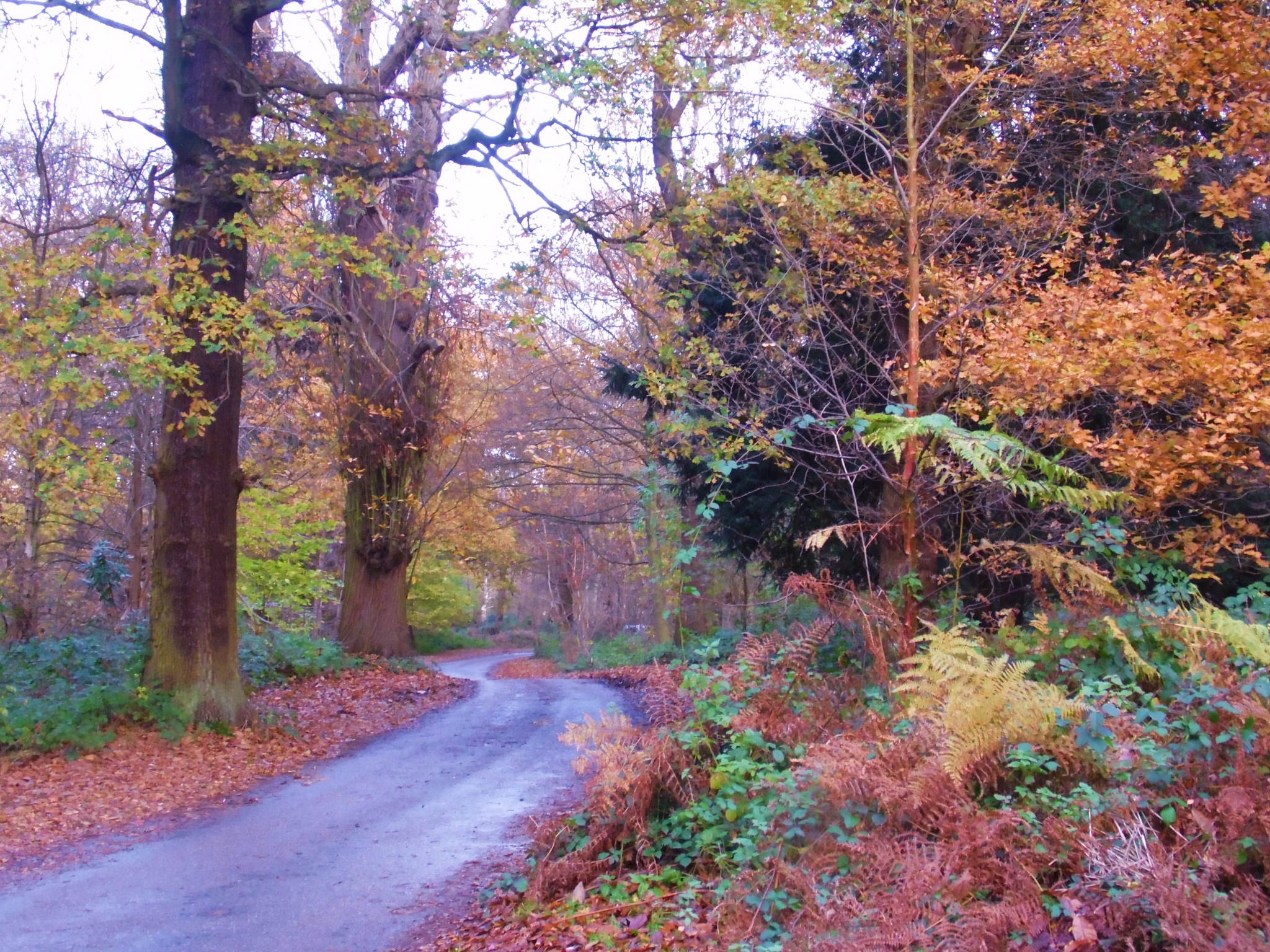 Pathway to the end of Autumn by Sandra Wright