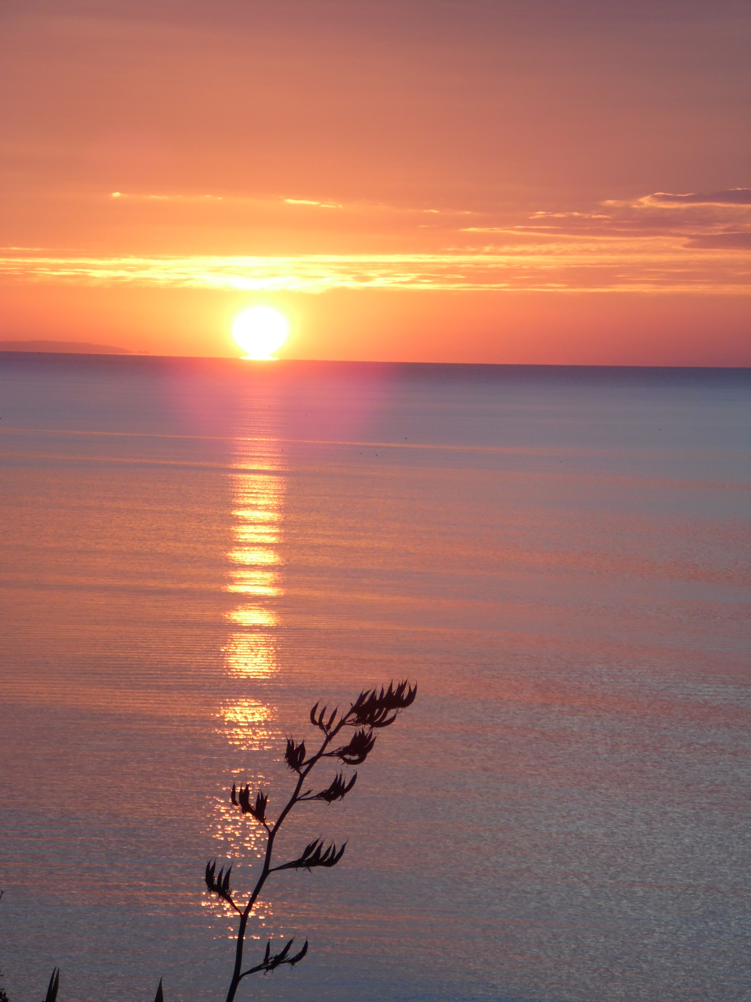 Summer mornings by Sandra Wright