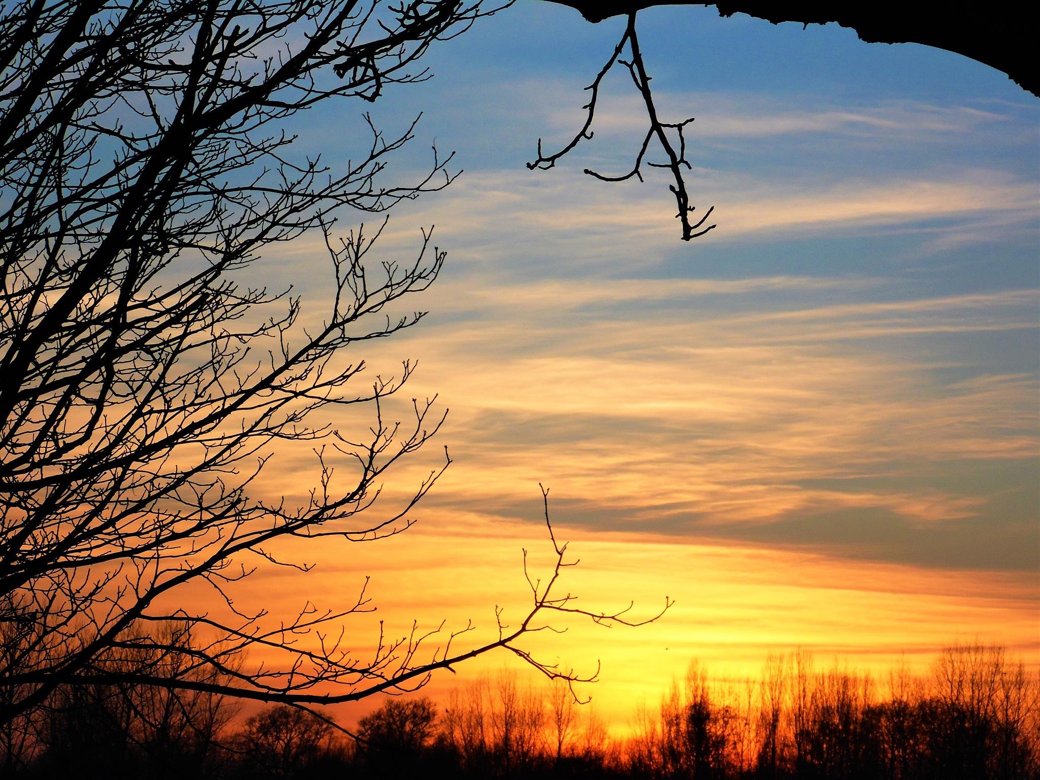 Winter sunset by Sandra Wright