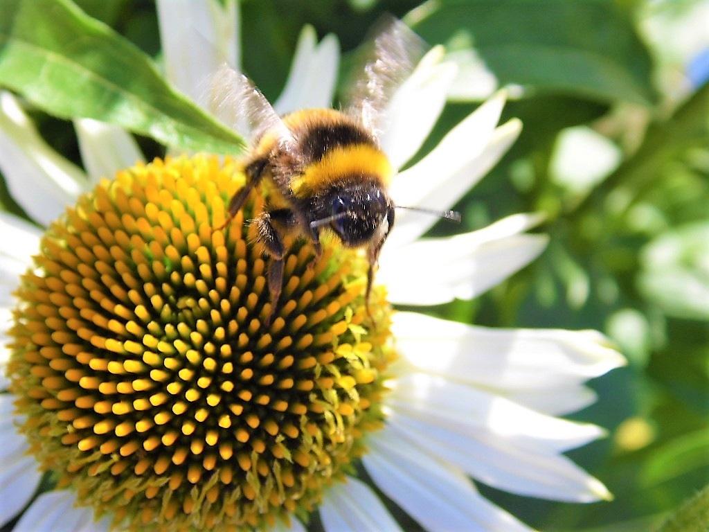 Bee landing on flower by Sandra Wright