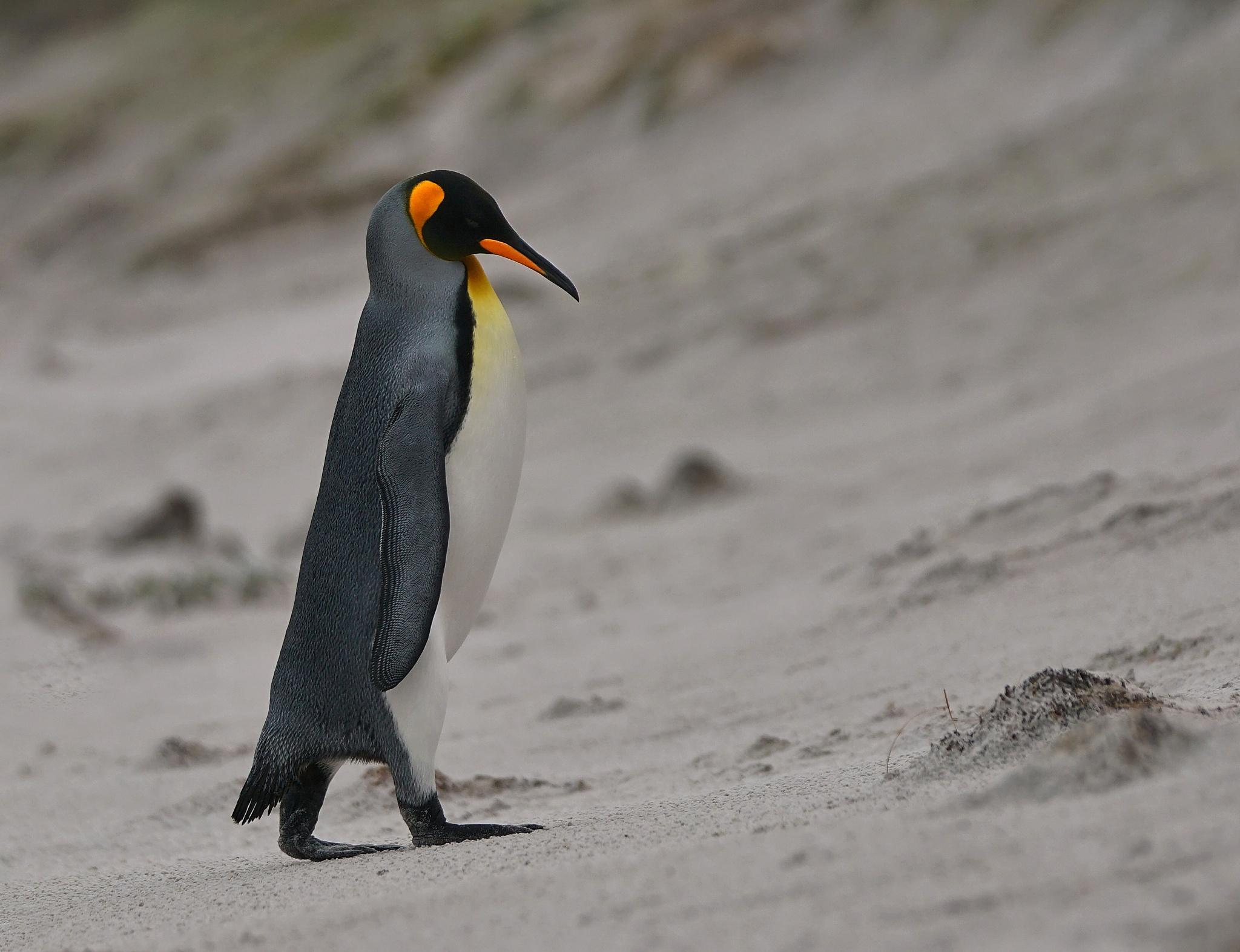 Falkland Islands by RenéBaldinger