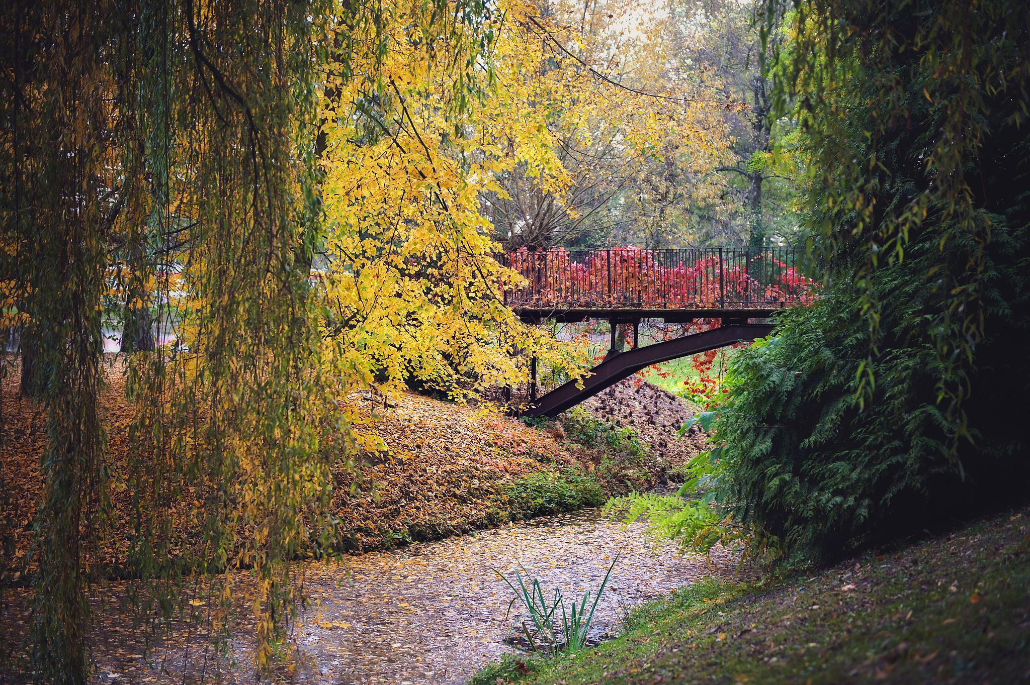 Botanic Garden by Joanna Bartkowiak