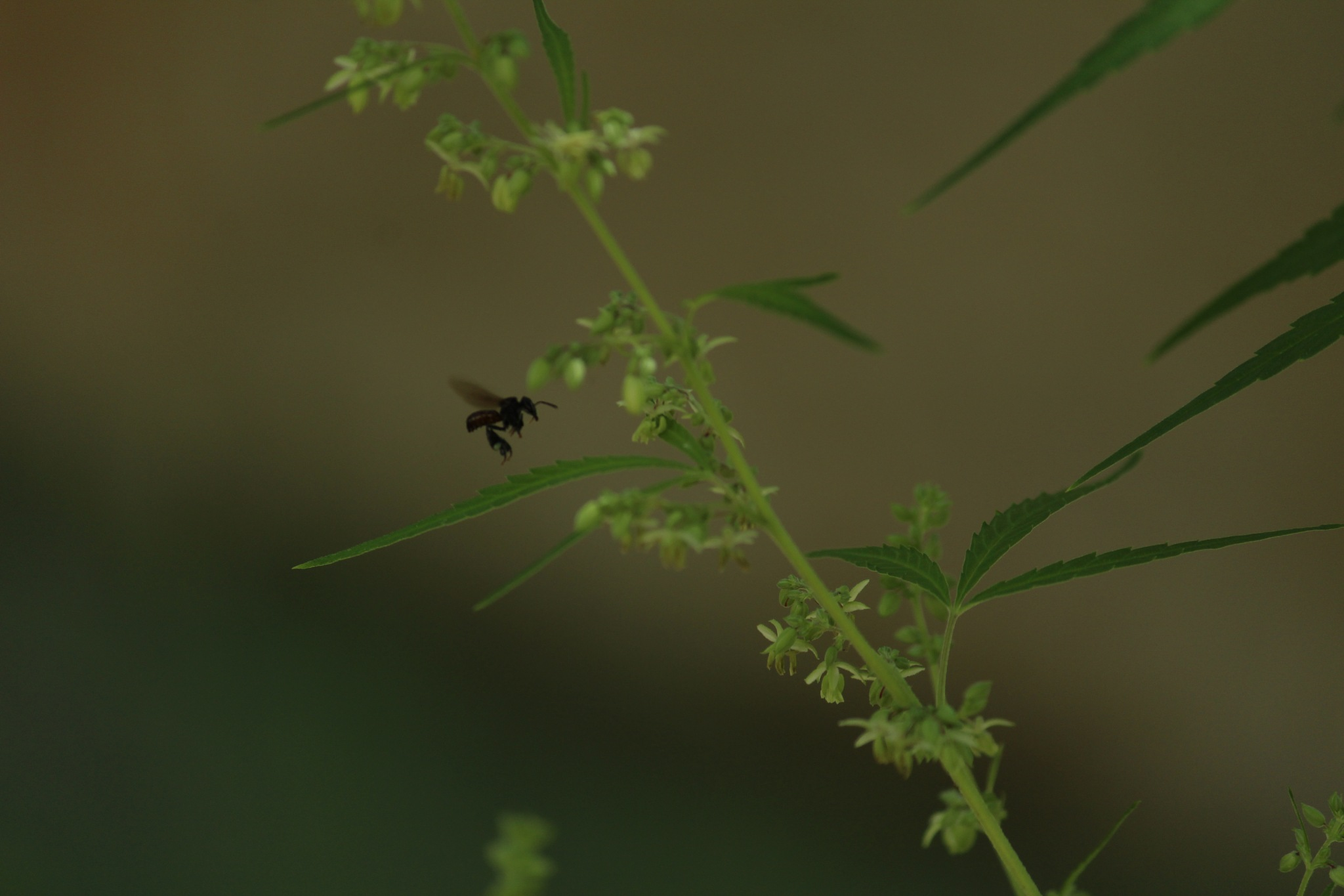 Bee on weed by Guido Muller