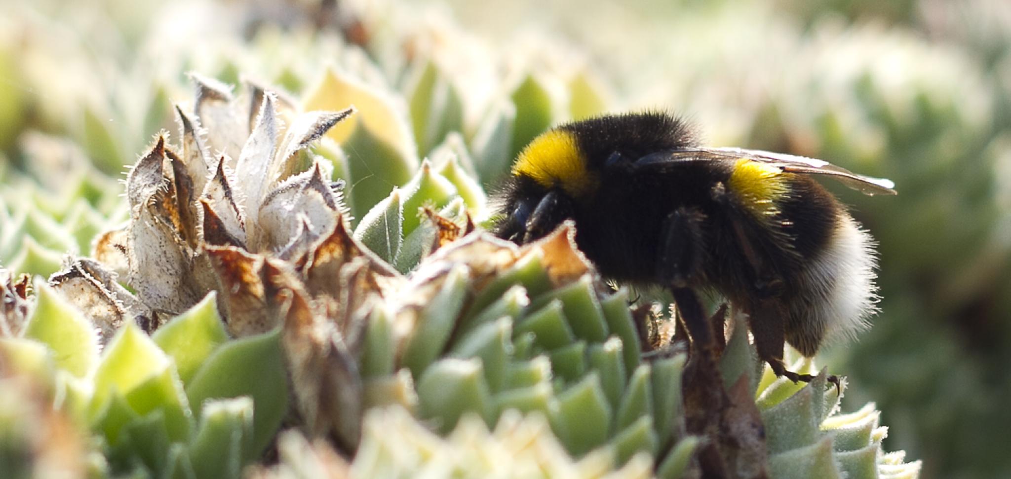 nectar profile by Dell'Erba Mario