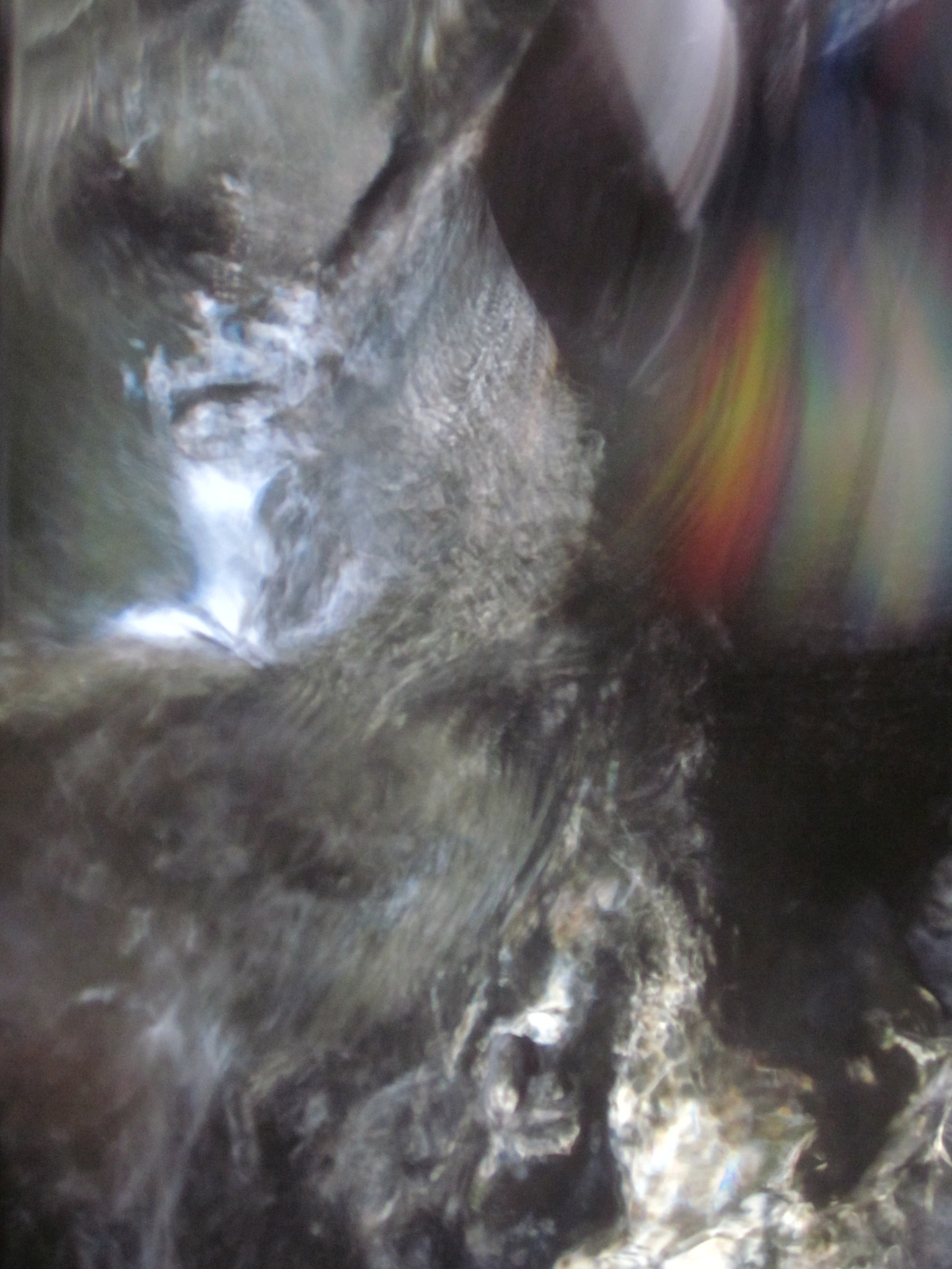 WILD & CRAZY SELFIE (OneStrokeWaterArt / CD Creekflare Over Instreamed Mirror) by Michael Masley