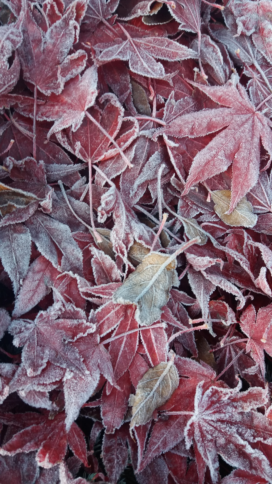 Frost by Trude
